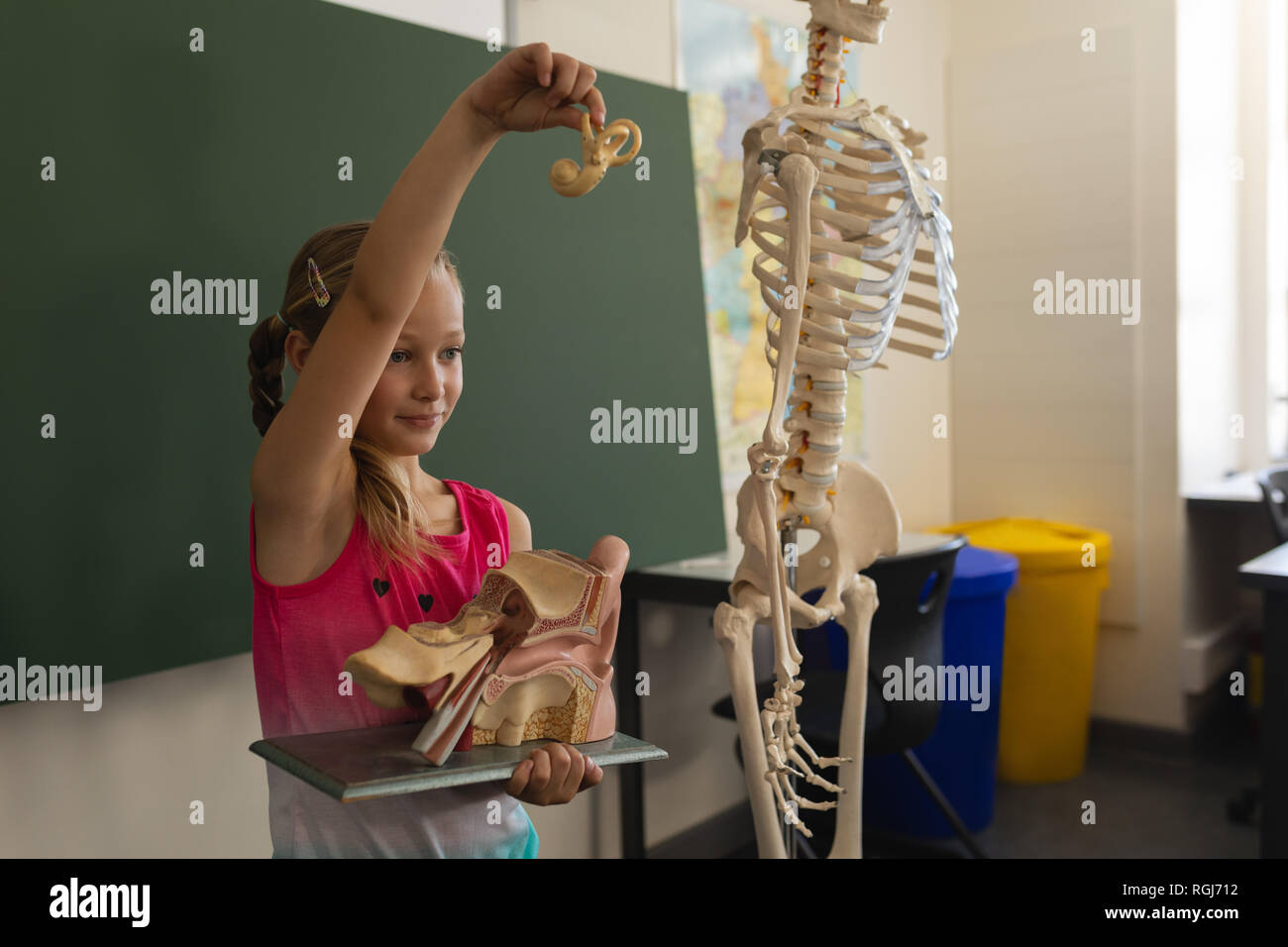 Side view of schoolgirl explaining anatomical model in classroom - Stock Image