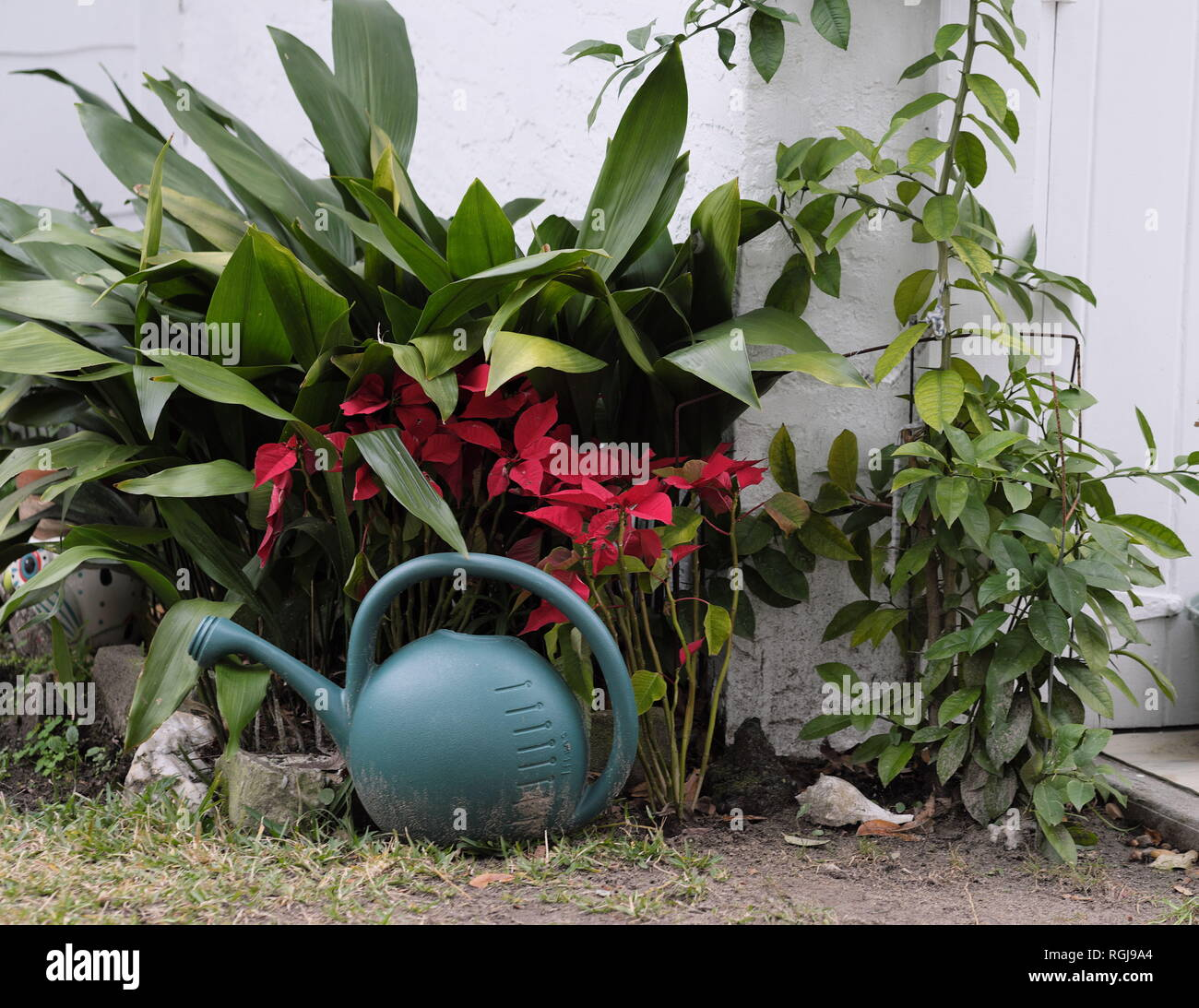 Wonderful Garden Arrangement Of Portable Watering Pot Against Red And Green Plants  With A Conch Shell