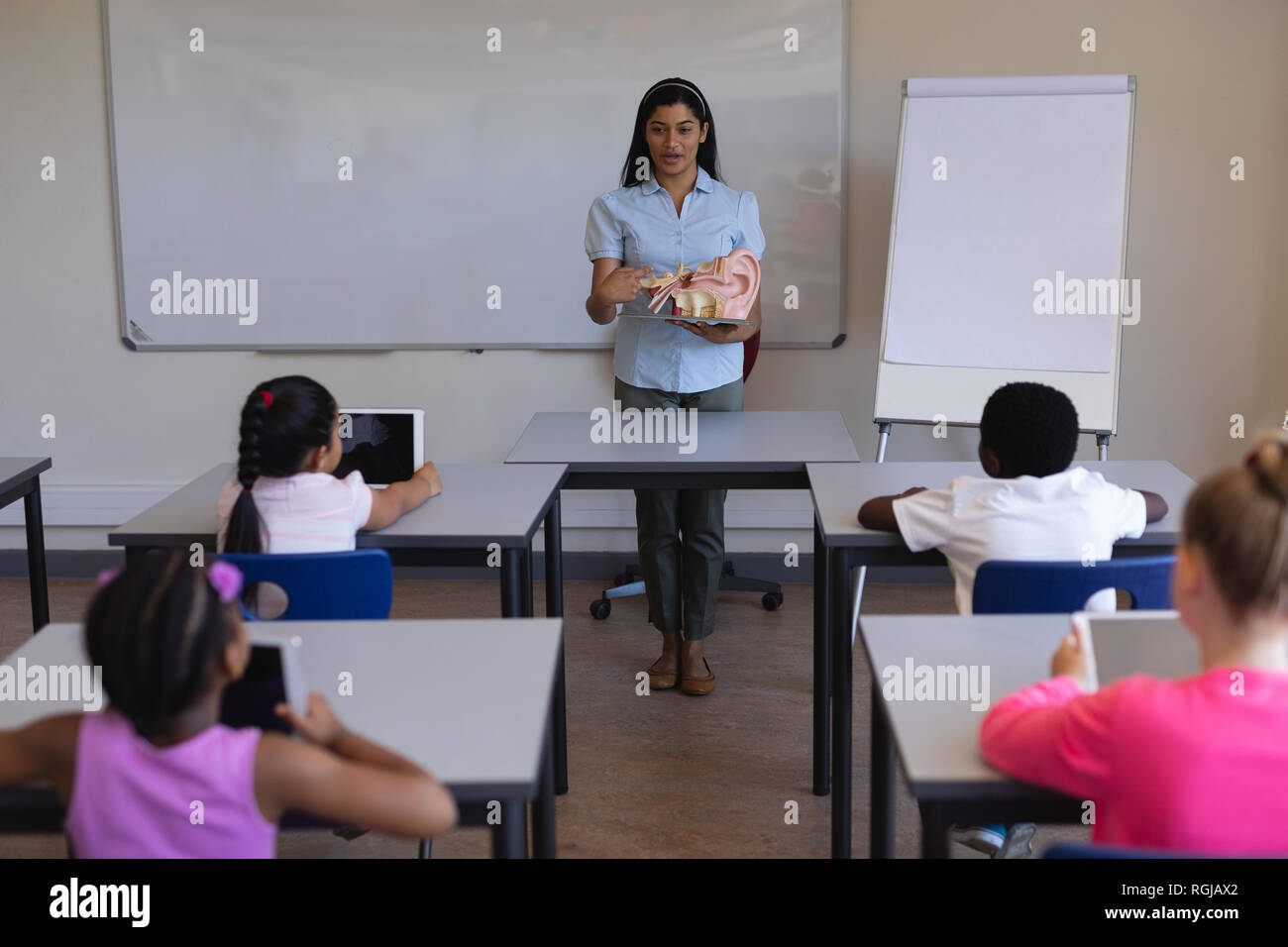 Front view of female teacher explaining anatomy of body parts in classroom of elementary school - Stock Image