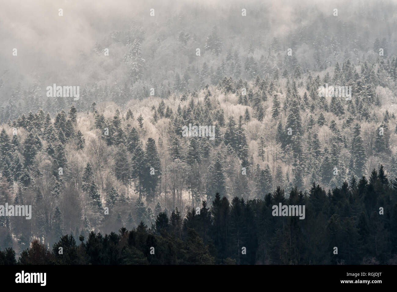 Beautiful winter mountain landscape  Forest in the rays of the