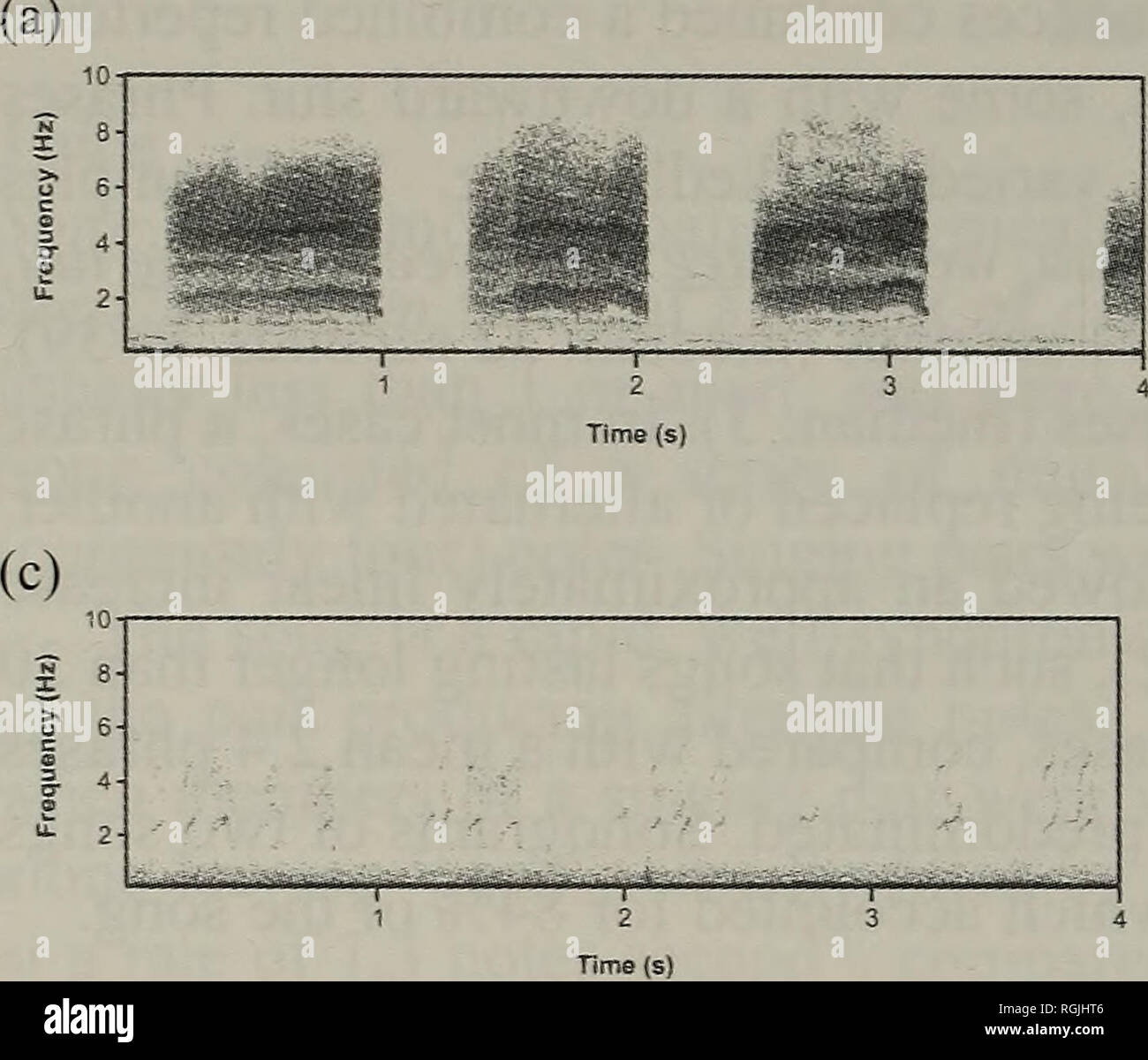 """. Bulletin of the British Ornithologists' Club. Birds. Philip Shaw et al. 126 Bull. B.O.C. 2005 125(2). (b) -- nnr.fTfinn-n^-r -  rM^rinn """" Ja Figure 3. Sonograms of: a) intense alarm call by adult while being handled; b) contact or alarm call, here given by two birds released in succession; c) begging notes of two juveniles. those of the nominate, differences between the two races were not statistically significant, perhaps due to the small sample size available. When measurements of A. k. stronachi from the two studies were pooled, the Tanzanian race (ti=21 individuals) was indeed found to - Stock Image"""