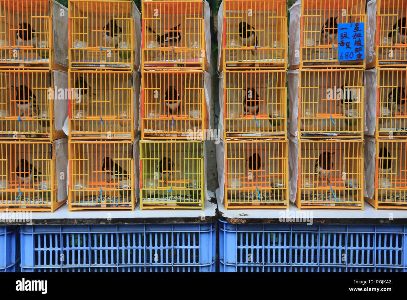 Birds for Sale, Yuen Po Street Bird Market and Garden, Mong Kok or Mongkok, Kowloon, Hong Kong, China, Asia - Stock Image