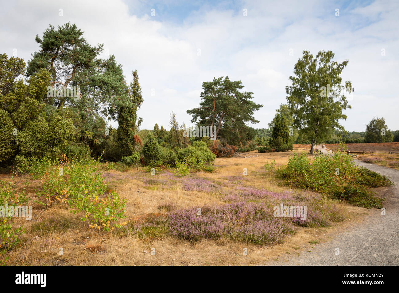 Germany, North Rhine-Westphalia, Muensterland, Westruper Heide, Hohe Mark Nature Park - Stock Image