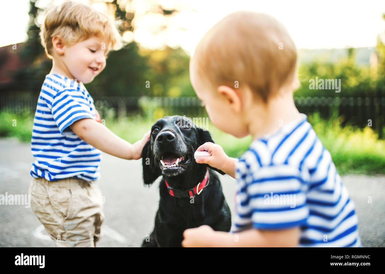 Toddler and his little sister stroking dog outdoors Stock Photo