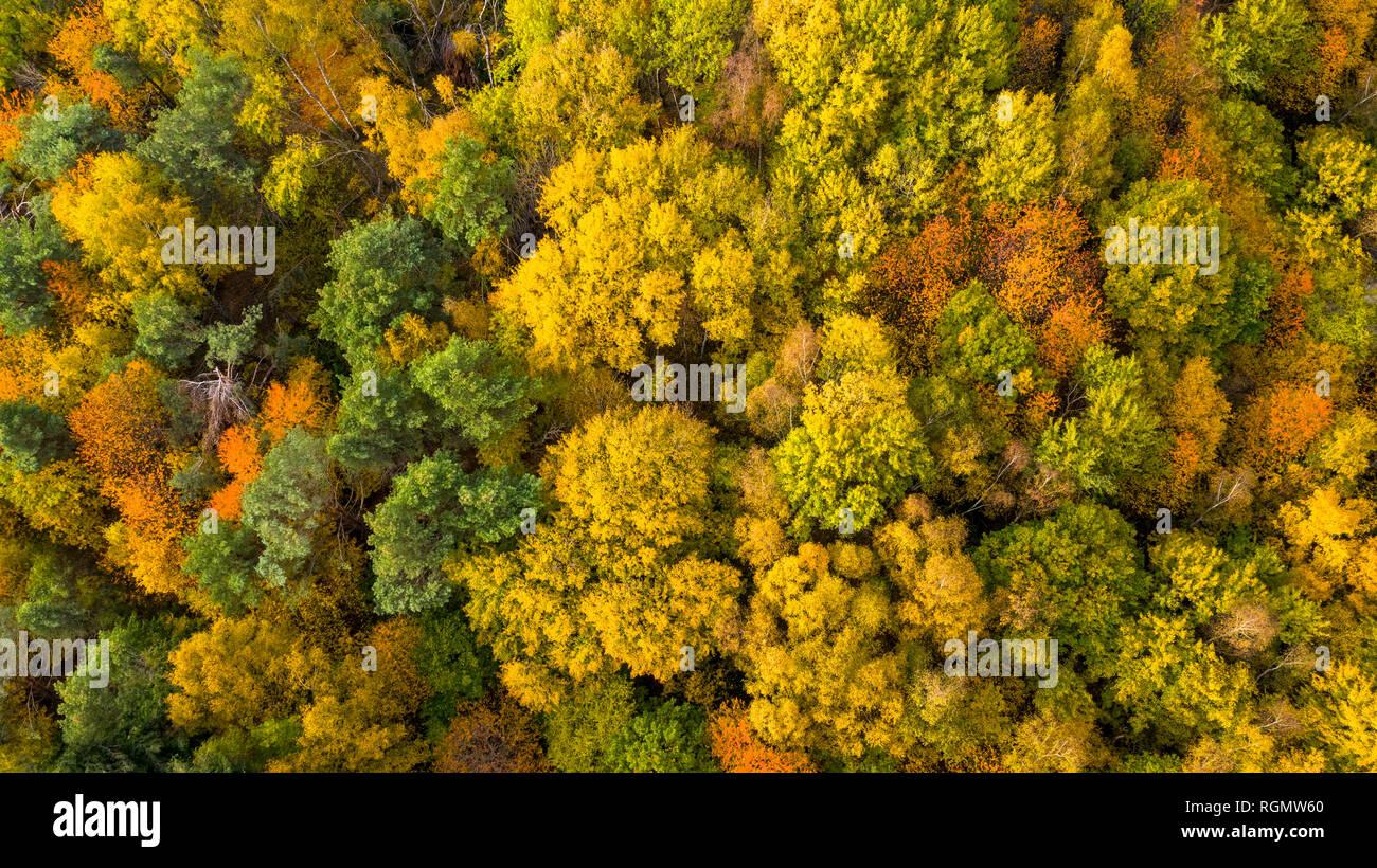 Germany, Hesse, Oestrich-Winkel, Rheingau, Aerial view in autumn - Stock Image