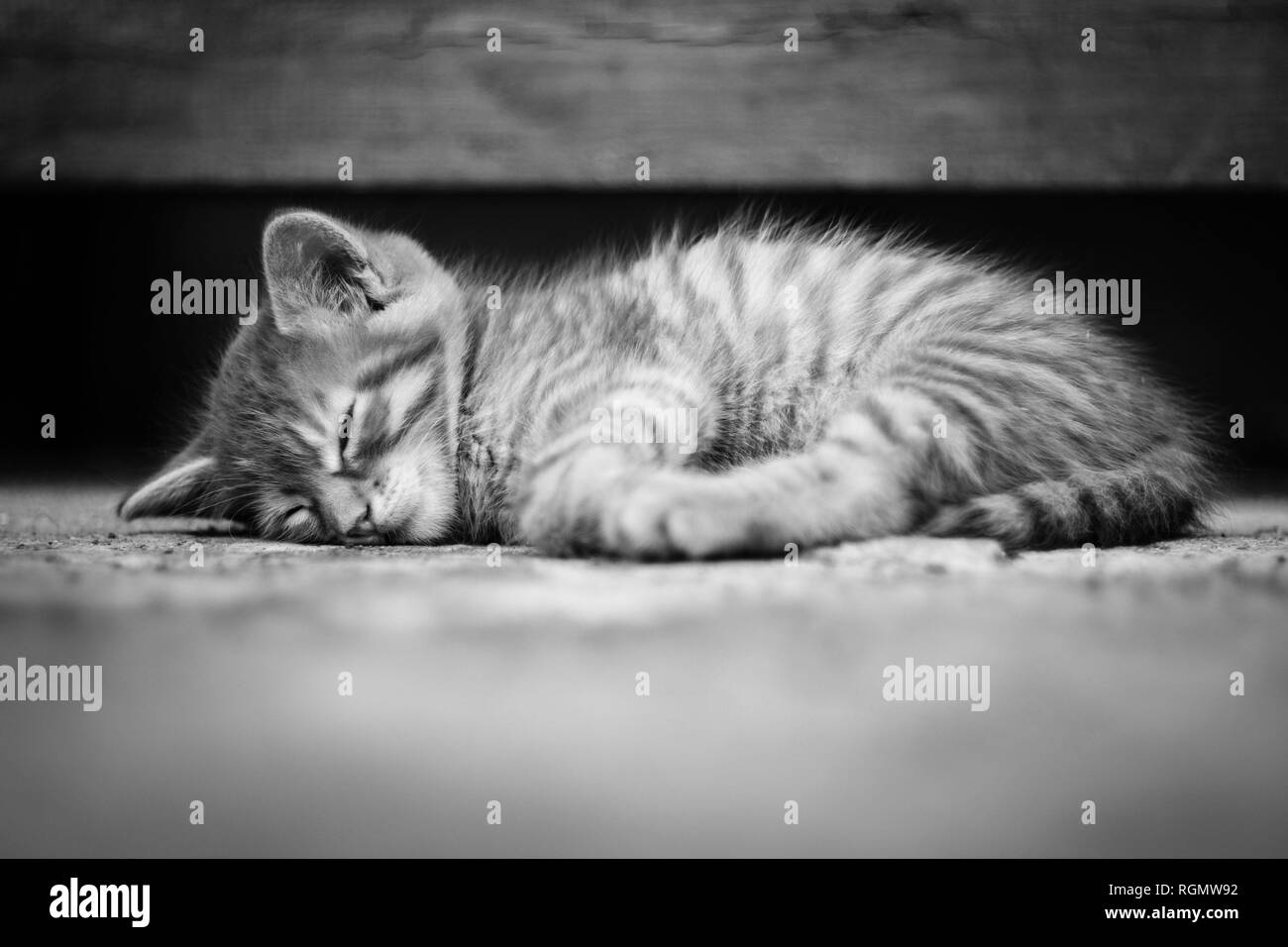 Adorable Kittens in black and white, monochrome. - Stock Image