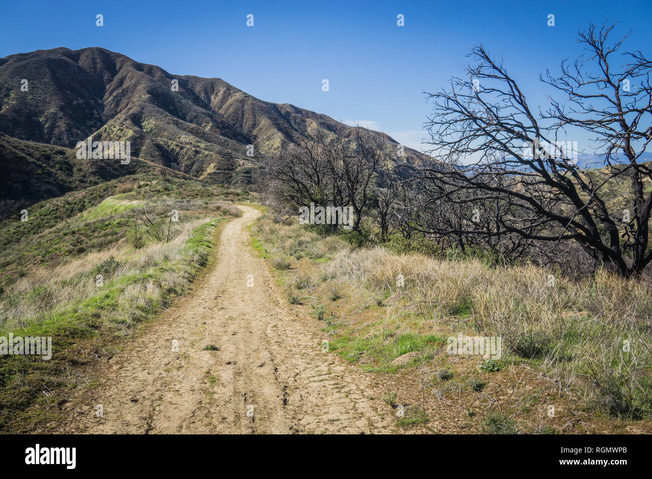 Remains of burned trees stand beside a dirt trail on a ridge in southern California hills. - Stock Image