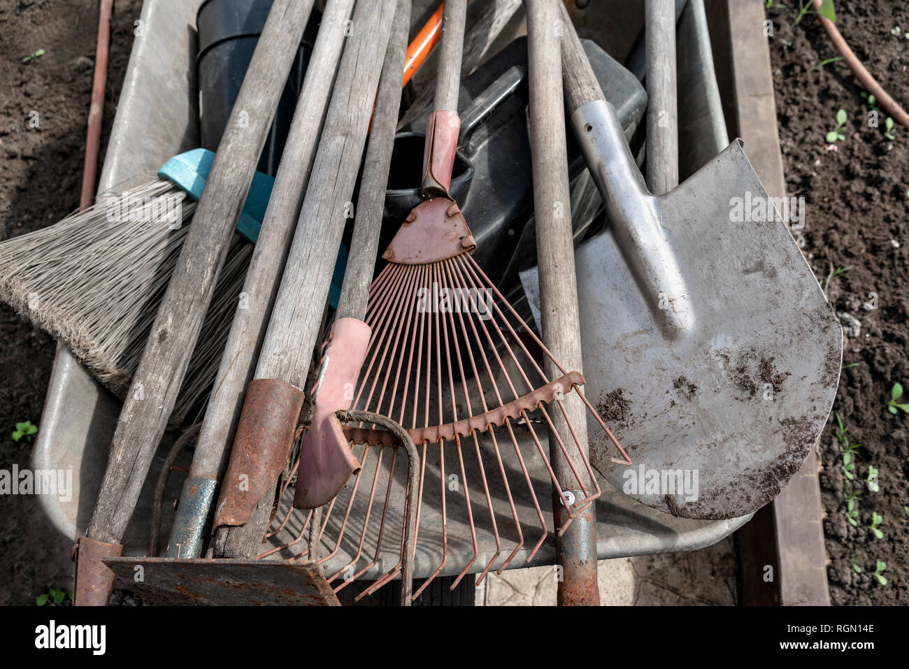 A Set Of Used Old Dirty Garden Tools A Rake Shovels Hoes In A