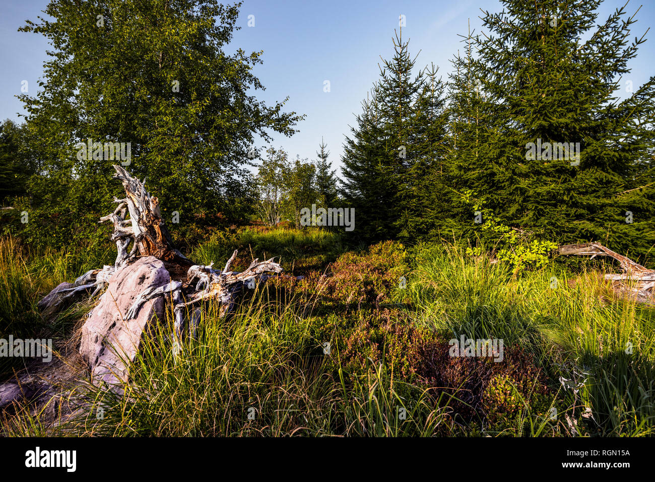 sandstone and landscape of untouched windthrow habitat, Northern Black Forest, Germany Stock Photo