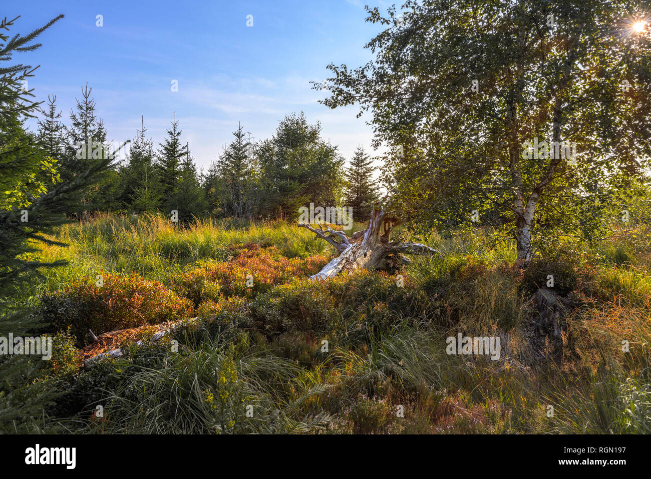landscape of deadwood and recreation of nature in the Northern Black Forest, Germany, nature trail Lotharpfad, conservation area and nature park Stock Photo