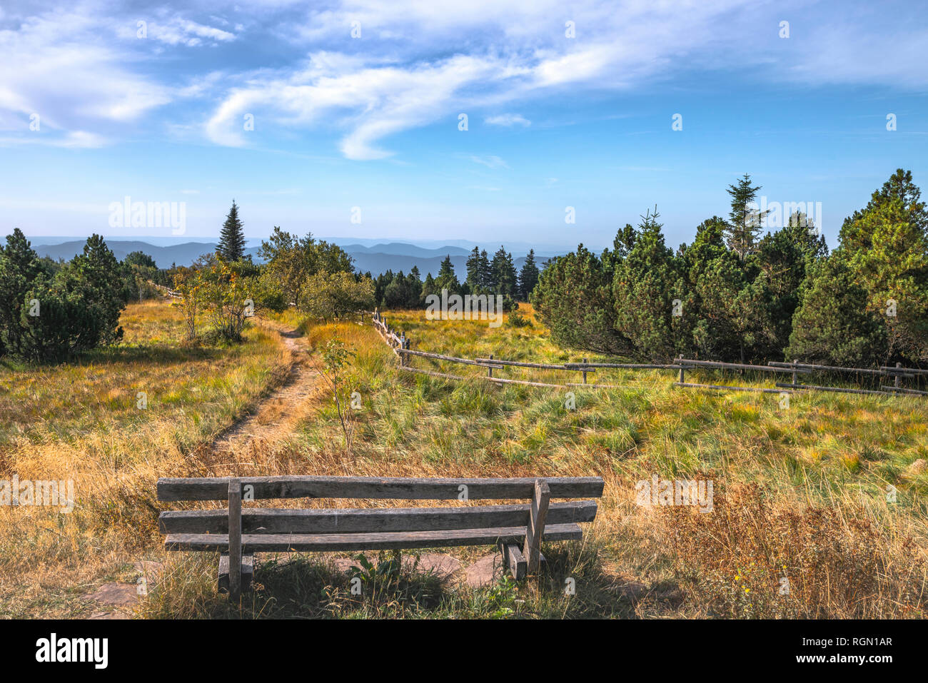 heather landscape with mountain pines in nature park of Northern Black Forest, Germany, mountain Schliffkopf; panorama viewpoint at the highest top - Stock Image