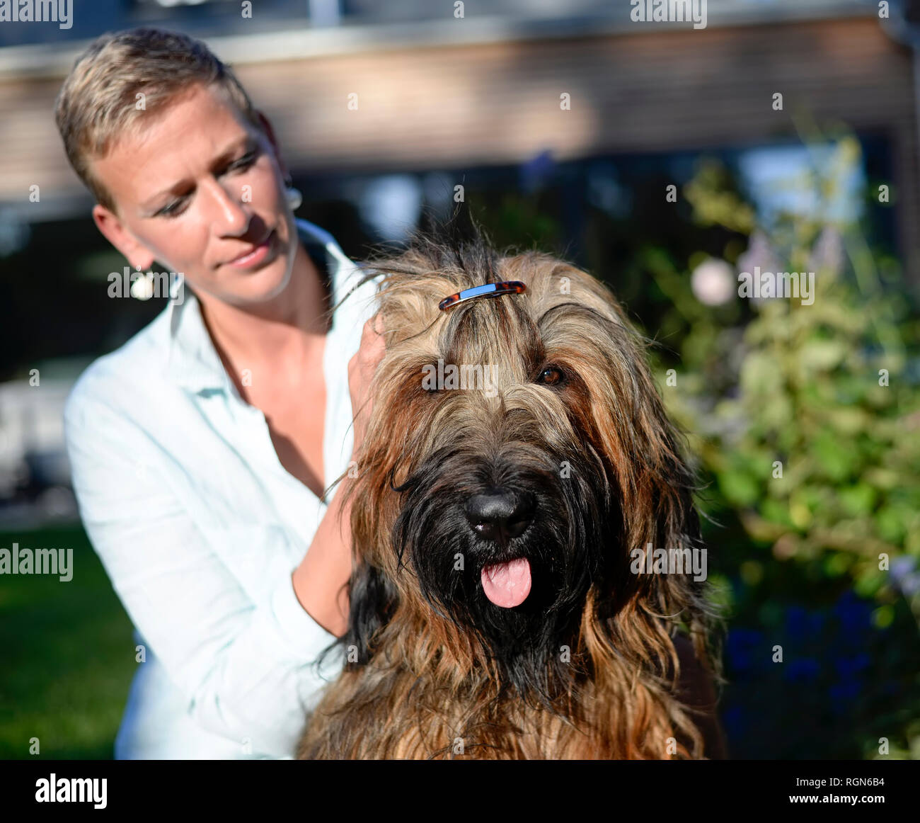 Portrait of dog with hair clip with owner in the background - Stock Image