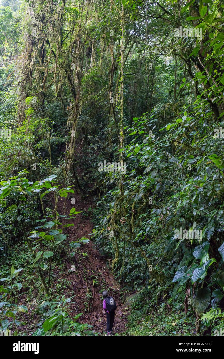 Tropical jungles of Costa Rica, Central America. - Stock Image