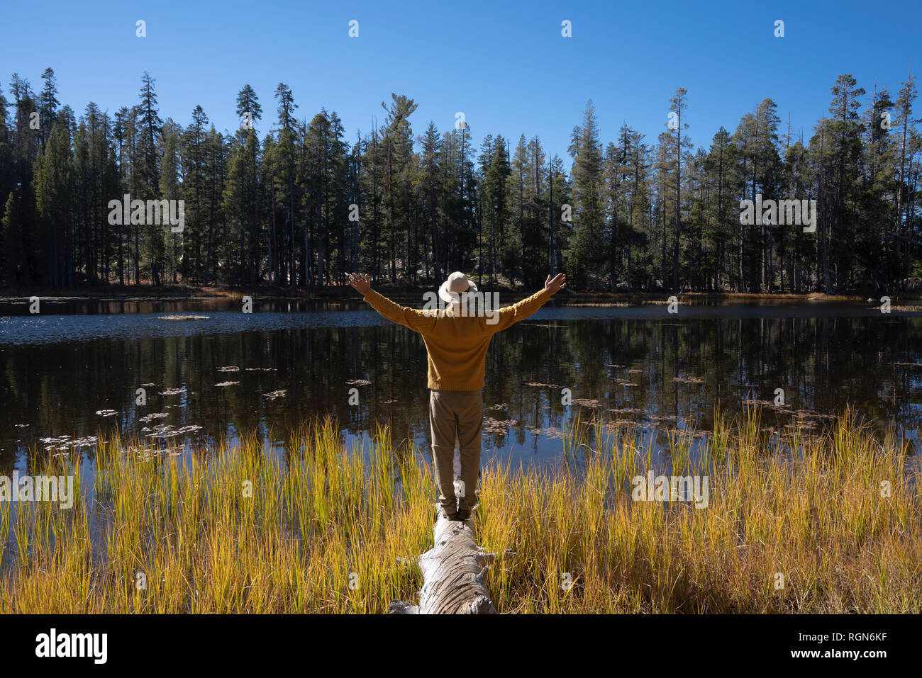 USA, California, Yosemite National Park, hiker standing on tree trunk in autumn - Stock Image