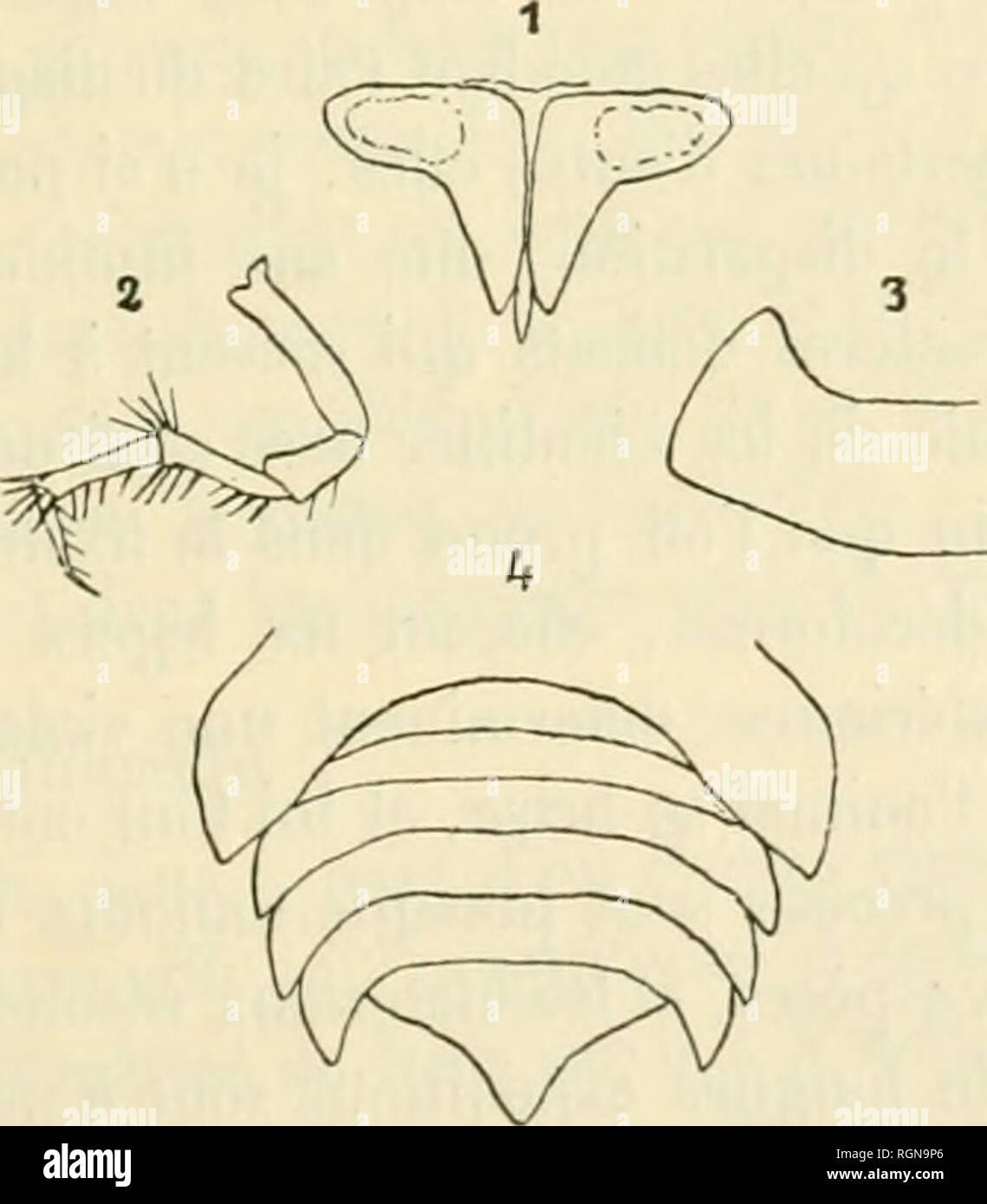 . Bulletin du Musum national d'histoire naturelle. Natural history. â 325 â Scolopendra var. mulilatis L. koch.â Chine : Ile de Tchou-San [coll. R.-P. Barberet-i/2 Nadar, 189/1], Ouest deChang-Ilaï [coll. Abbé de Joan- nis] et Japon (coll. H.-W. Brôlemann, 1902). â Japon centra! : Setsu (musée de Hambourg, 190.3). â Nord du Japon : Nippon (])' Soller, 1888). â var. japonîea L. Koch. â Japon (1869). -- Nippon moyen:environs de Tokio (Harmand, 1901). â Yokohama (coll. H.-W. Brôlemann. 1902). â var. multidehs Newport. â Tonkin : Lao-Kay (D' Chevalier, 1902). â Côte orientale de Sumatra : P - Stock Image