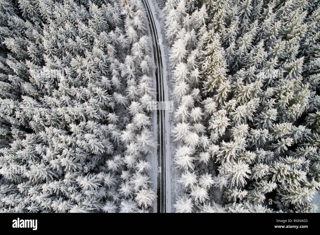 Scotland, snow on pine trees, empty road Stock Photo