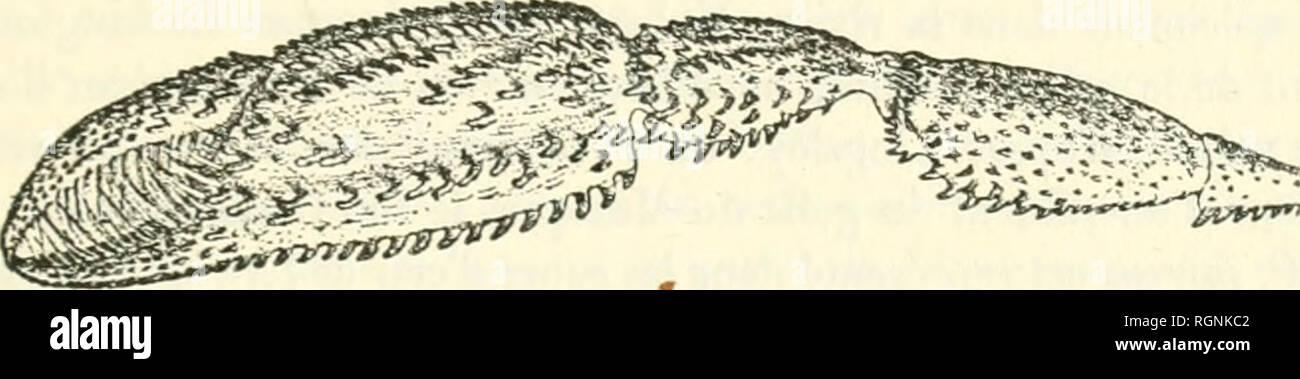 . Bulletin du Musum national d'histoire naturelle. Natural history. 150 SvR LES PjLÃMOyS IIECVEILLIS DÃSS LES Eà U.à DOUCES DE LA BaSSE-CaLIFORSIE PAIi M. DlGVET, PAR M. E.-L. Bouvier. Parmi les Gruslacés d'eau douce recueillis eu Basse-Californie |)ar M. Di- gnet se Irouveut de nombreux Palonions qui proviennent do la l'ivière Mu- lege et des canaux d'irrig-alion issus de celle rivière. Ces Crustacés appar- tiennent à Irois espèces dont une seulement est nouvelle; mais ils sont tous intéressants parce qu'ils jettent quelque lumière sur la variabilité cl la dis- tribution géofjraphiqu - Stock Image