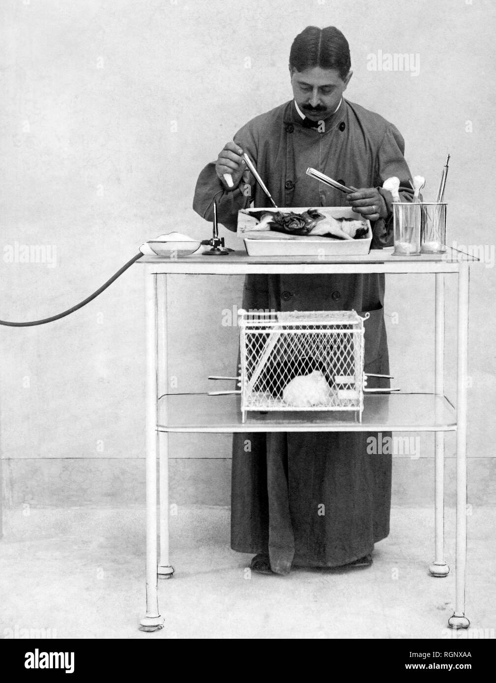 science, vivisection 1911 Stock Photo