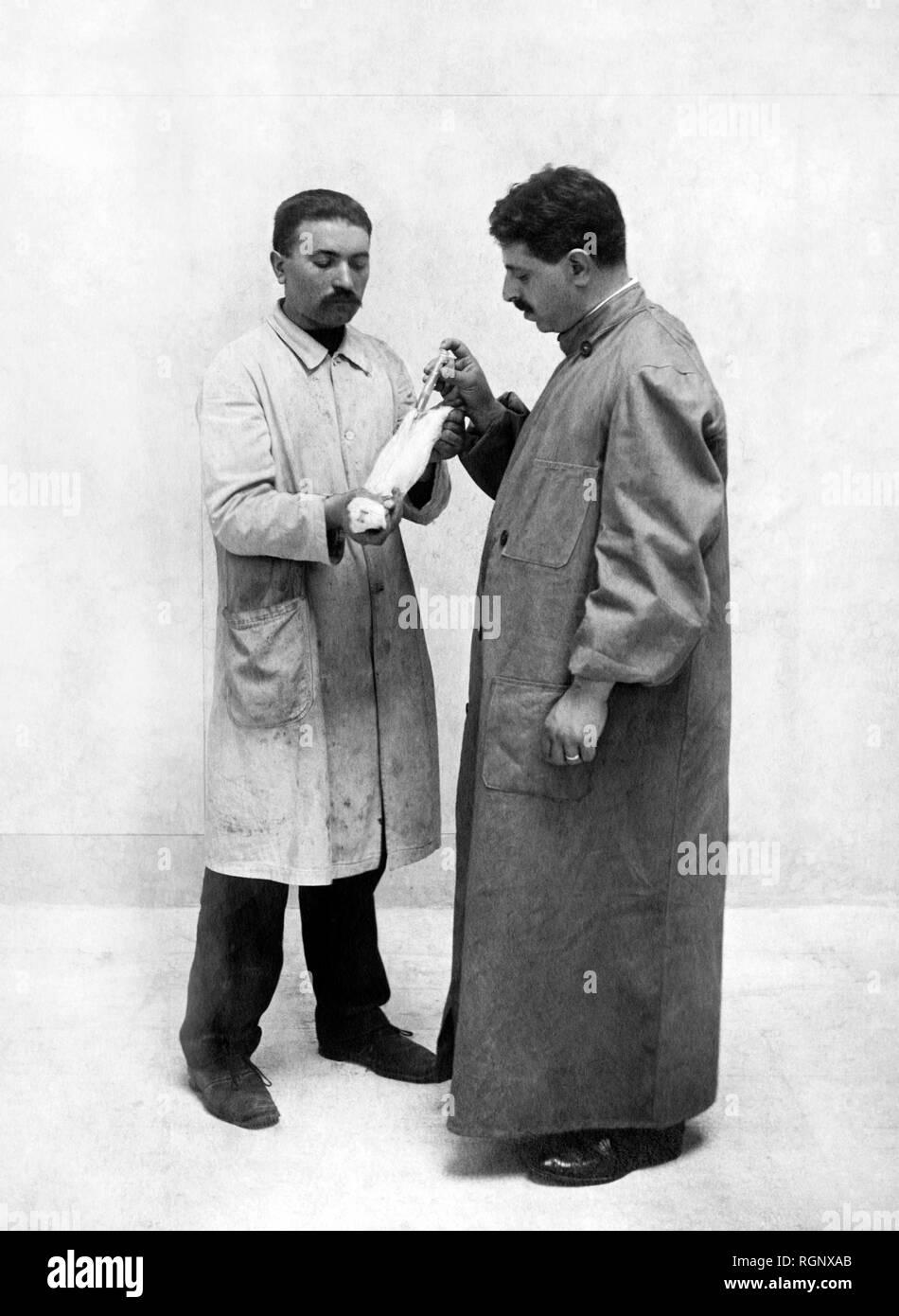 science, vivisection 1911 Stock Photo