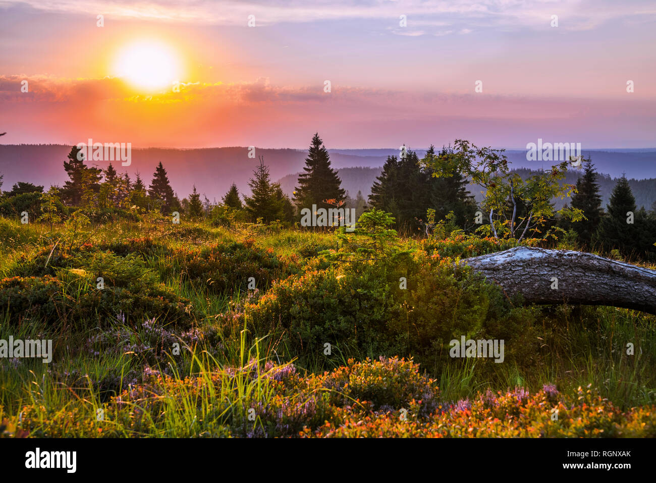 scenic sunrise over mountain crests of Northern Black Forest, Germany, wild protected nature of heather with bilberry and deadwood on the Schliffkopf Stock Photo