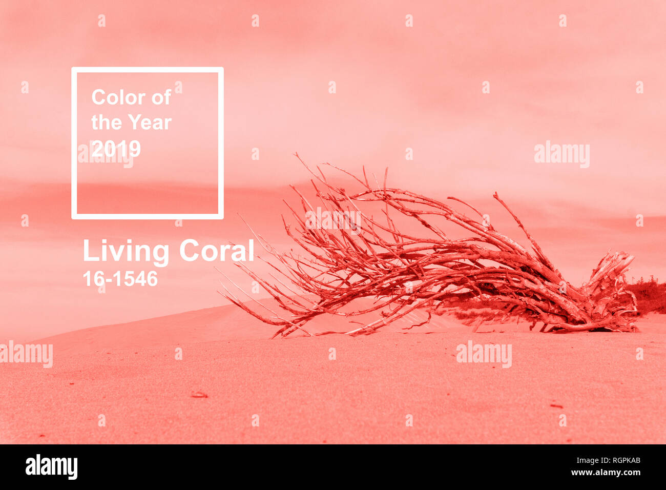 LIVING CORAL. Color of the year 2019 concept. Living coral 2019 paint texture. Pink background - Stock Image