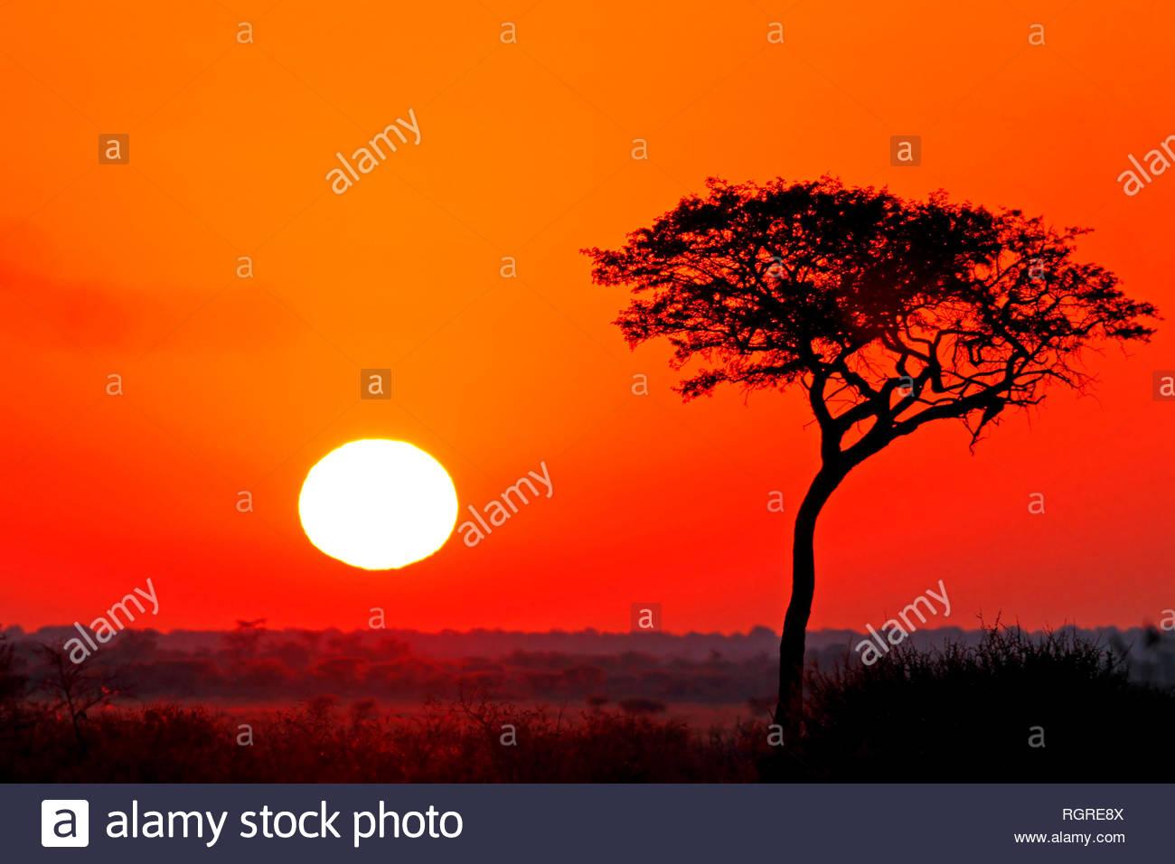 sunrise, central kalahari game reserve, Sunday Pan, Botsuana - Stock Image
