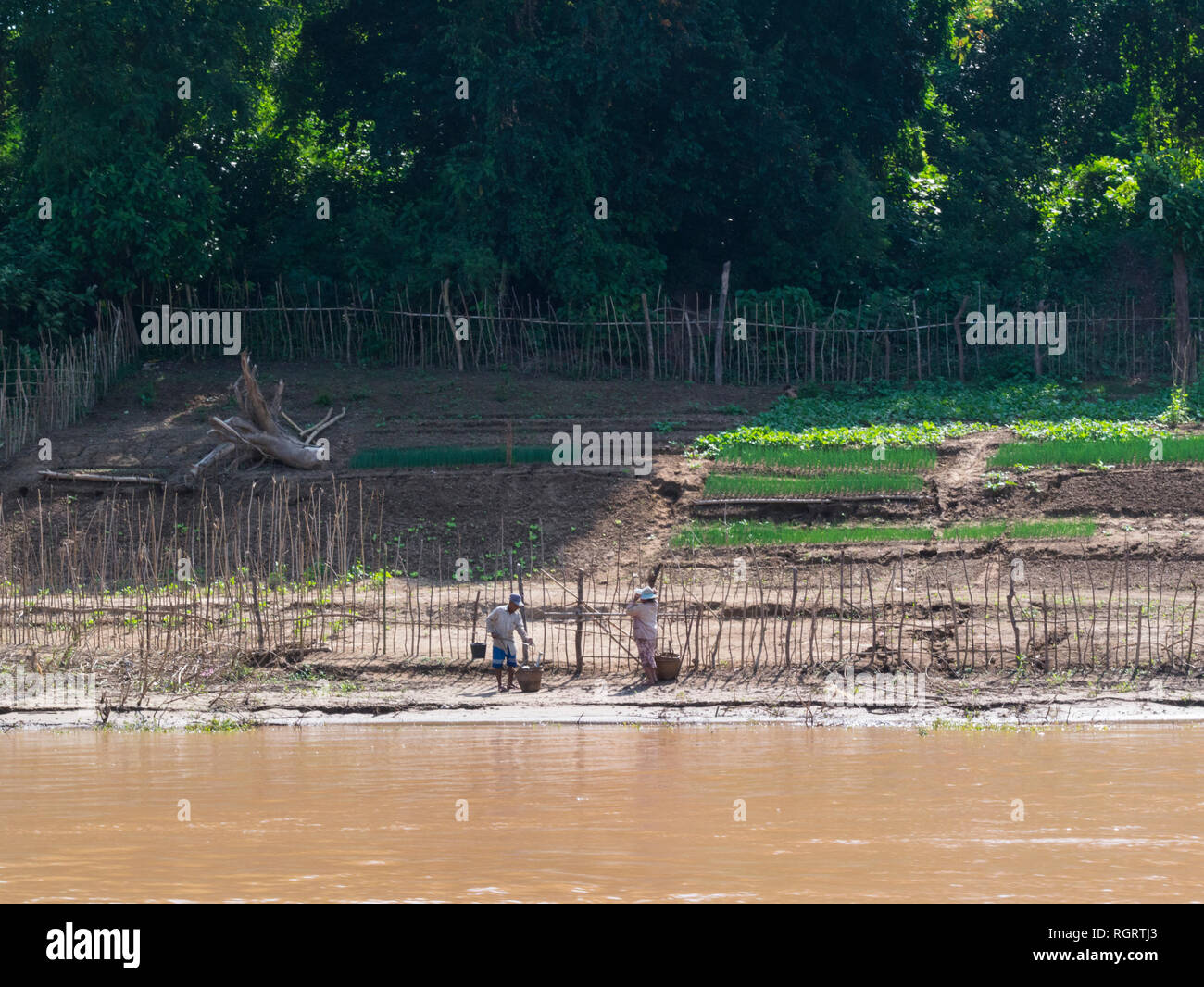 Farmers working on the edge of their land on riverside of mighty Mekong River Luang Prabang Laos Asia signs od riverbank erosion - Stock Image