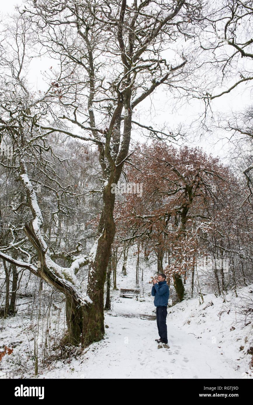 Little Druim Wood Glen Finglas Woodland Trust reserve Loch Lomand and the Trossacks national park Scotland Stock Photo