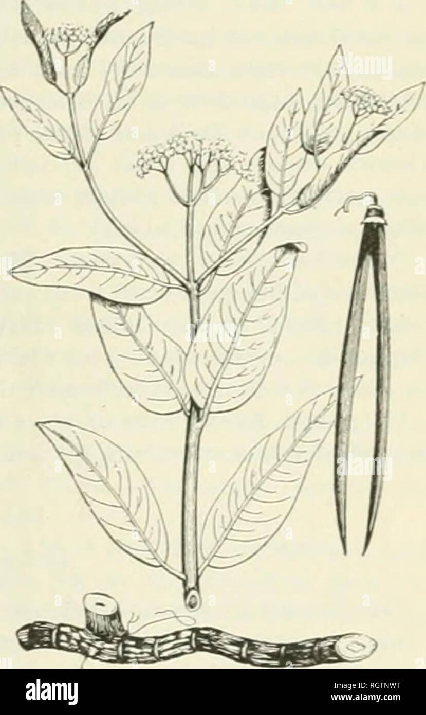 Bulletin  1901-13  Agriculture