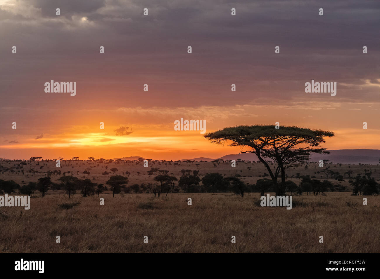 The Serengeti is one of the most popular nature reserves in the world and is also a UNESCO World Heritage Site. It is home to a variety of animals. Stock Photo