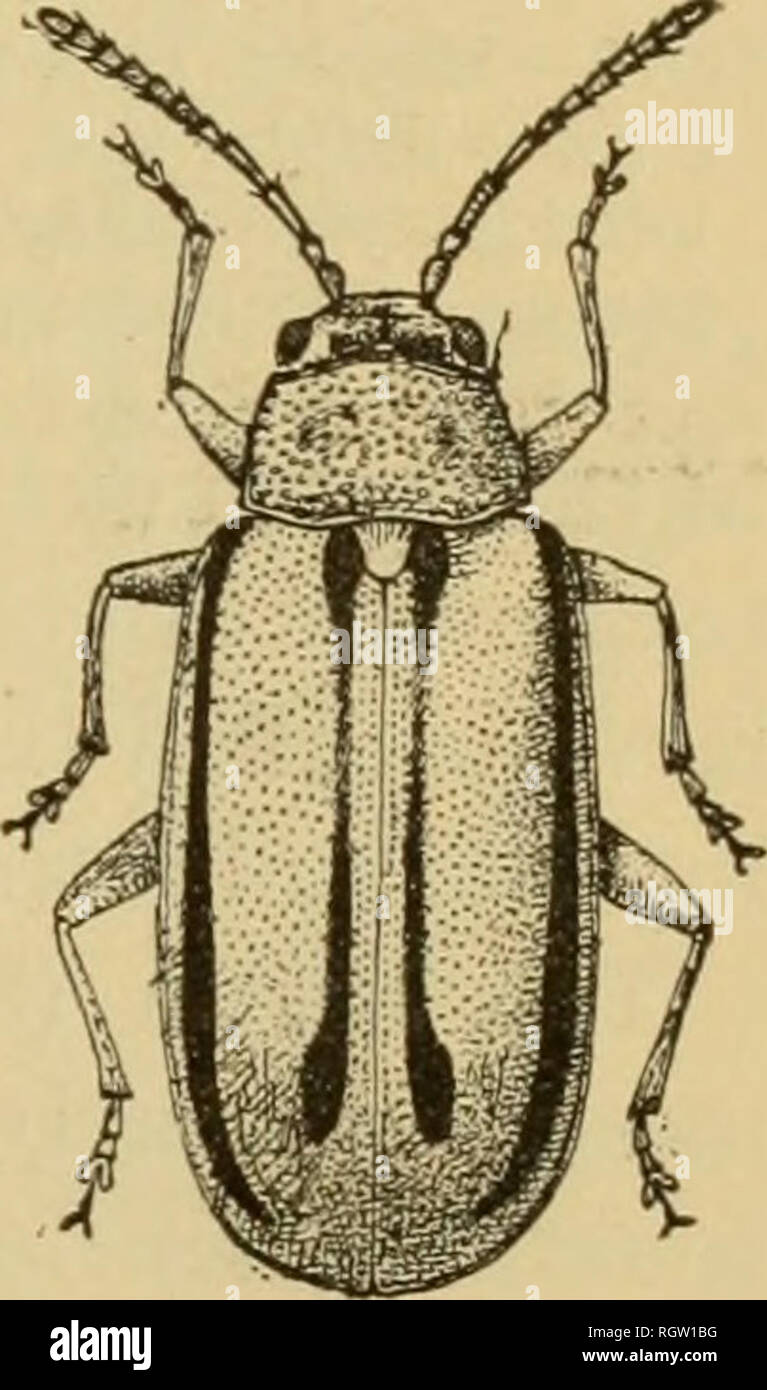 Bulletin  Insects