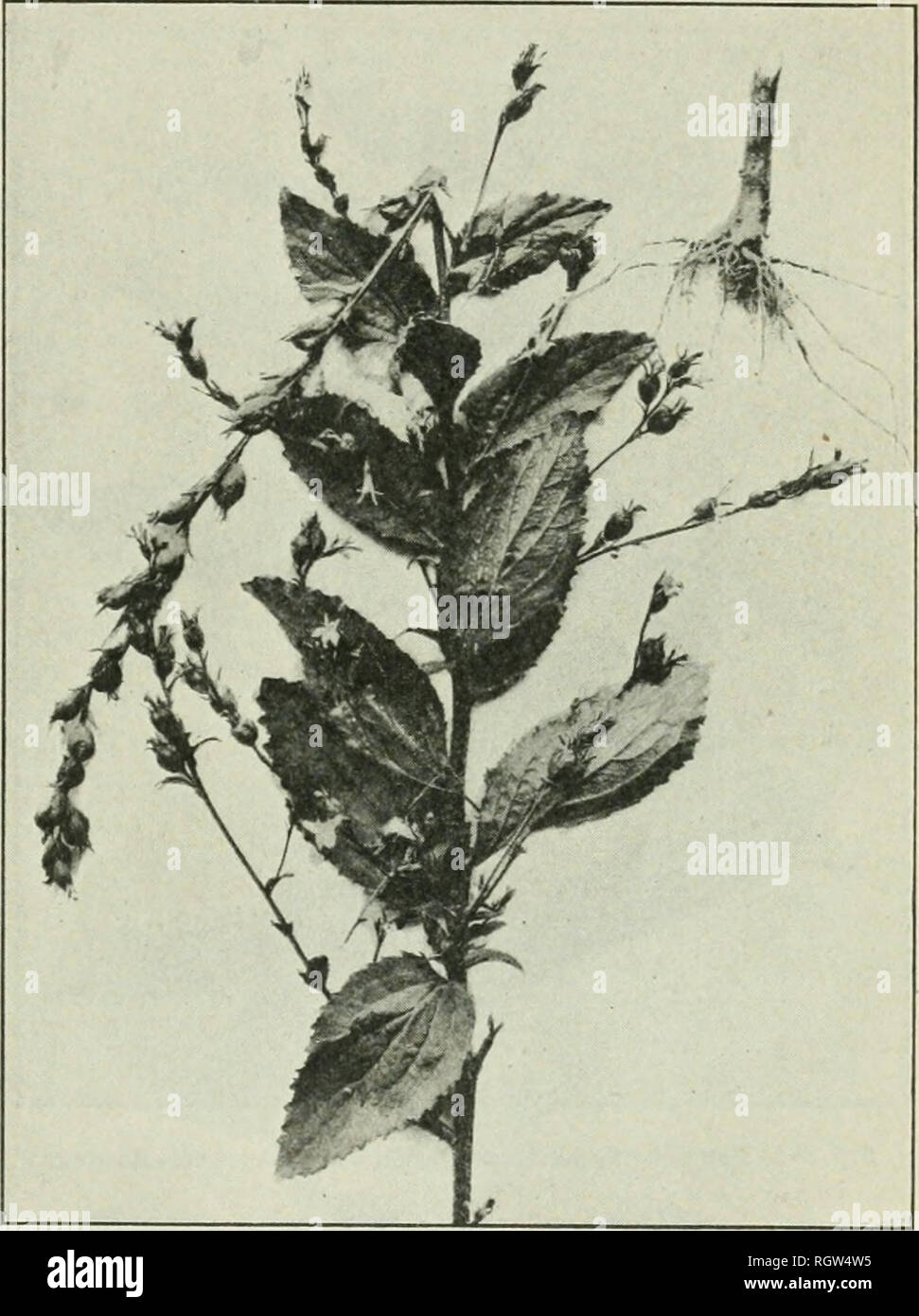 Bulletin 1901 13 Agriculture Agriculture Plants Furnishing