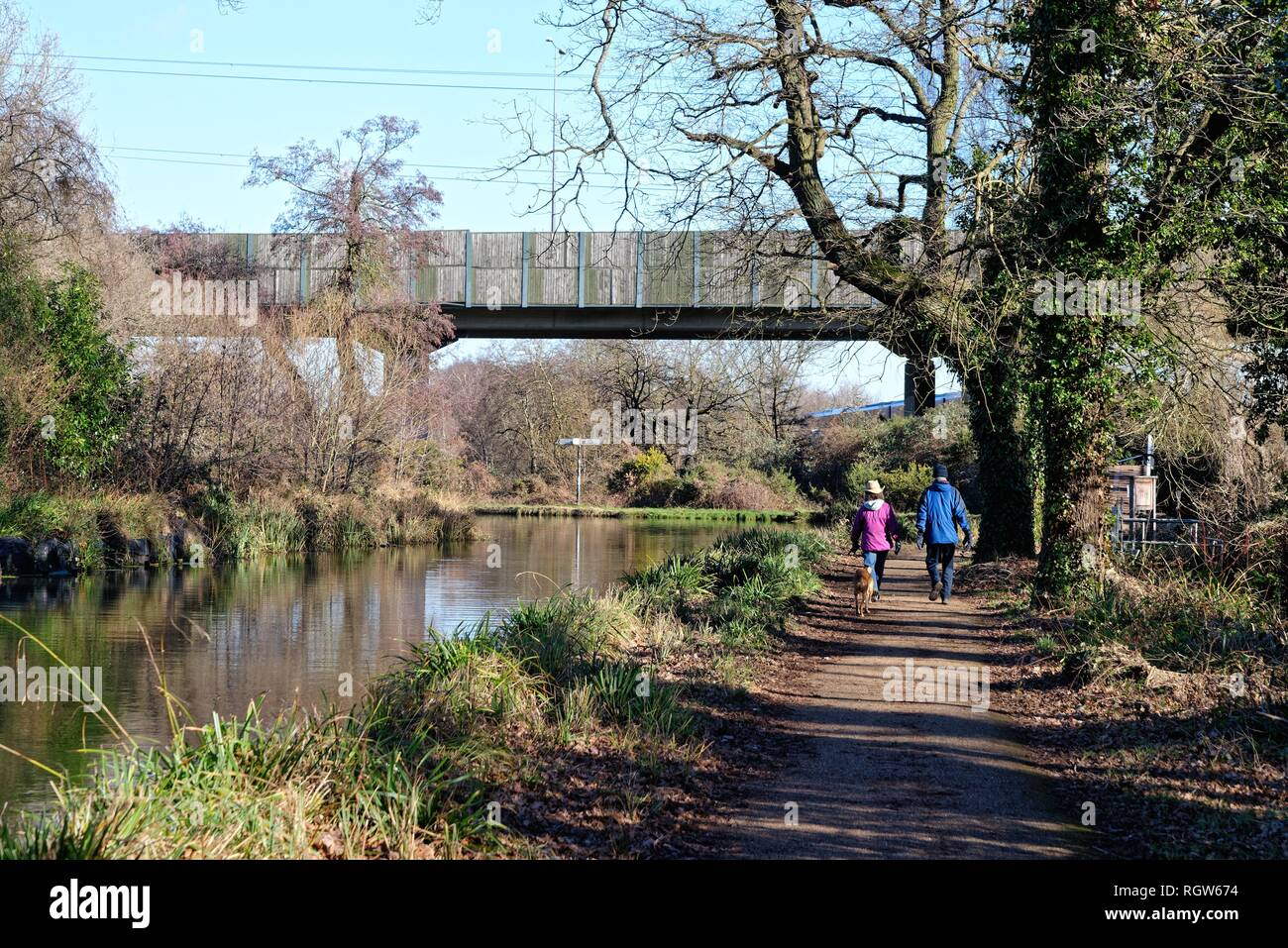 Middle aged couple walking dogs by the Basingstoke canal at New Haw on a sunny winters day, Surrey England UK Stock Photo