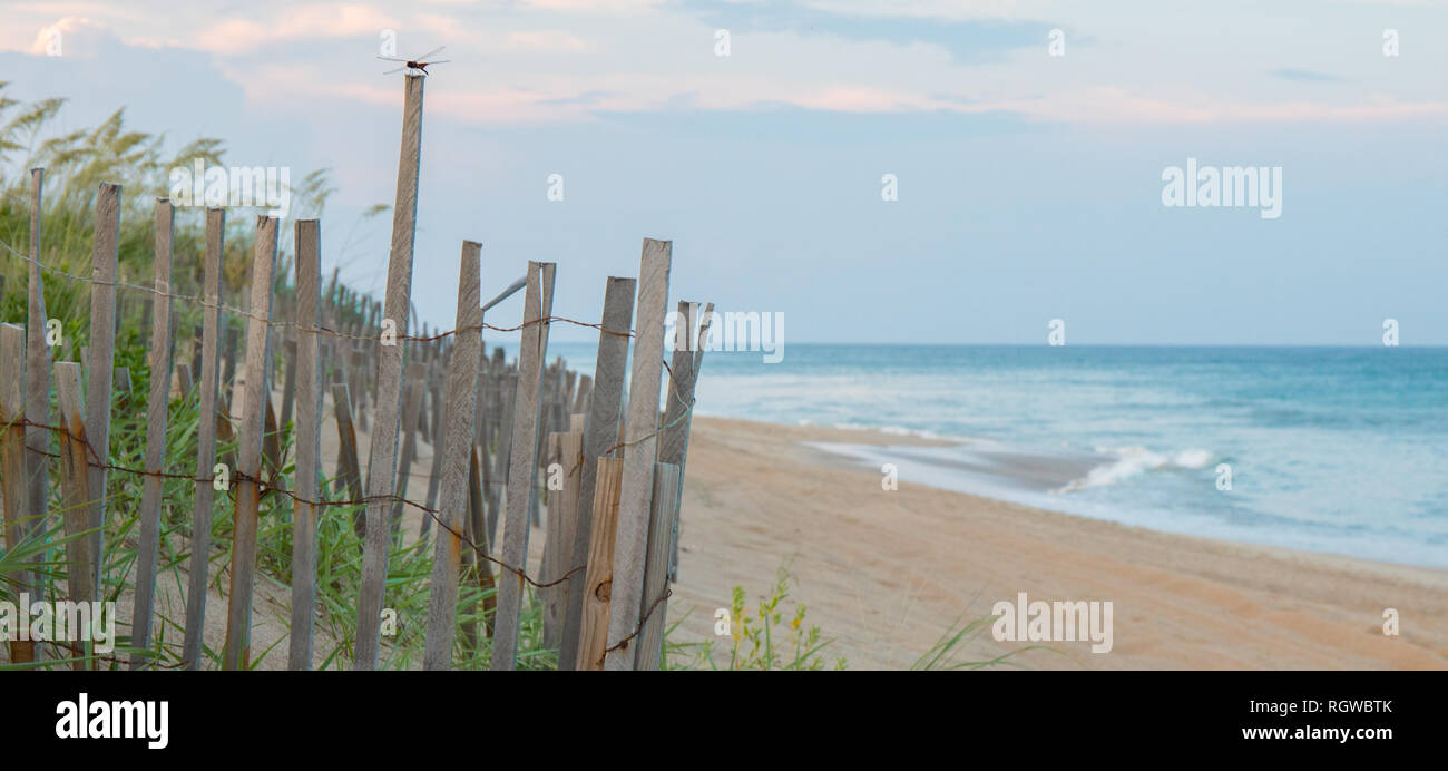 A single solitair dragonfly perched on a sand dune fence at the beach with the ocean in the background. - Stock Image