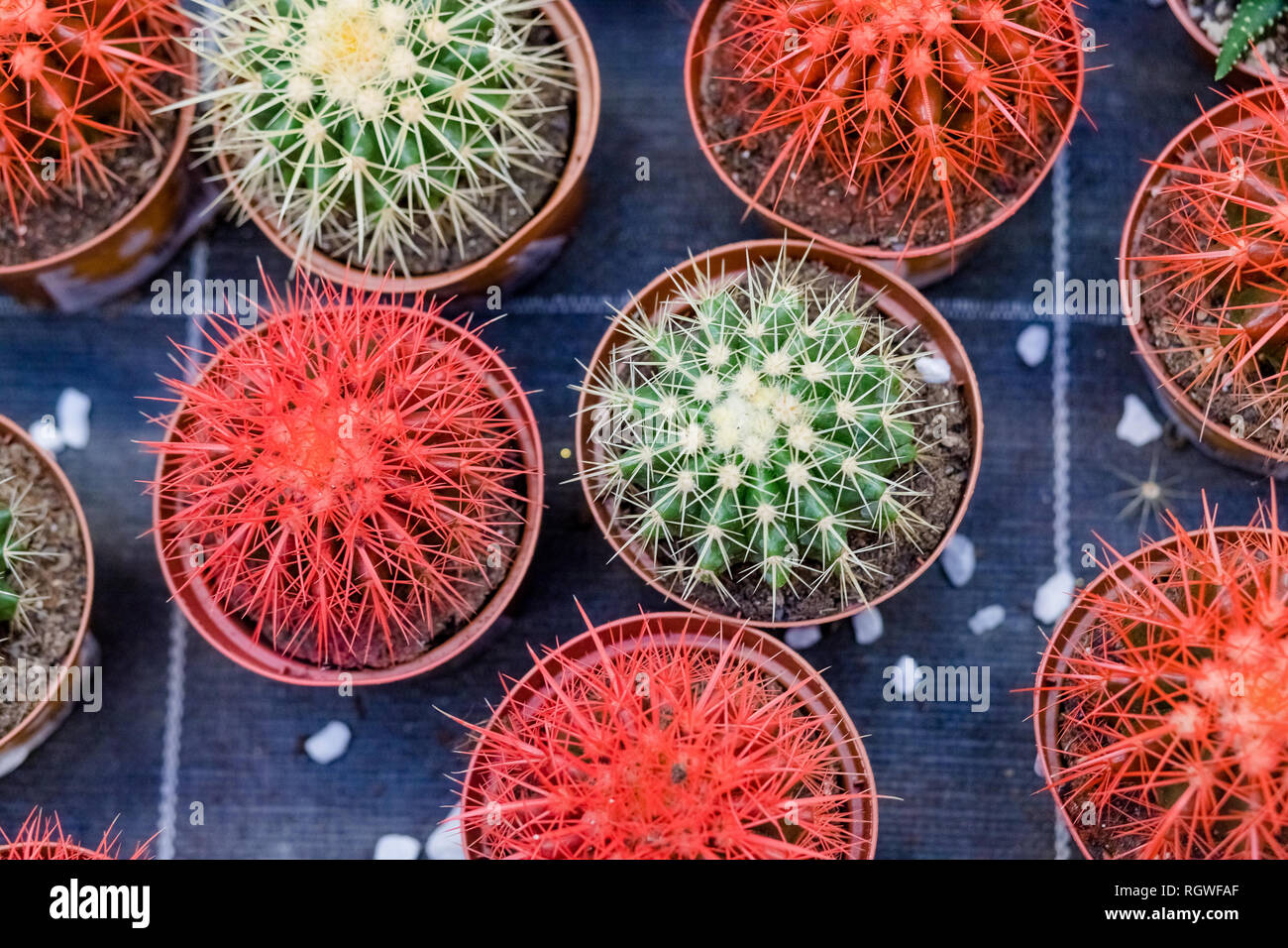 Cactus Plants For Sale High Resolution Stock Photography And Images Alamy