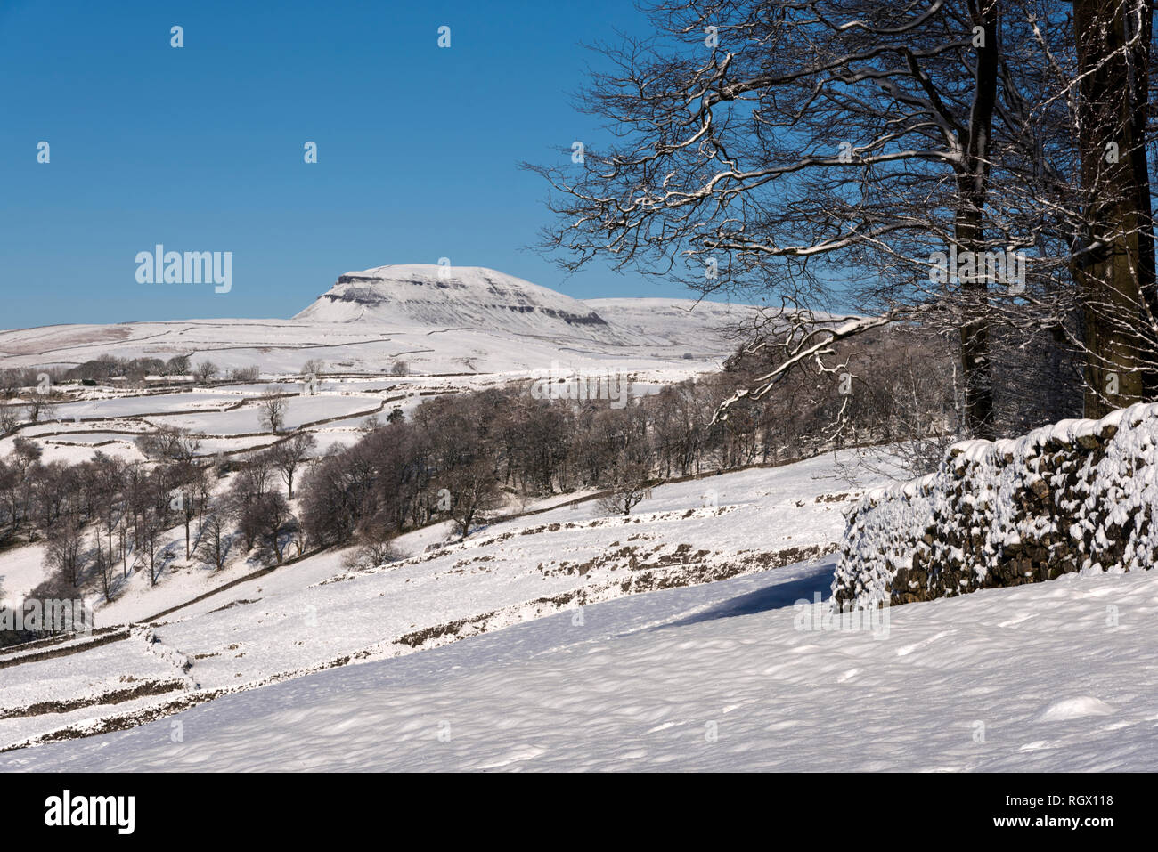 Winter view of a snow covered Pen-y-ghent peak, seem from Langcliffe, Yorkshire Dales National Park, UK - Stock Image