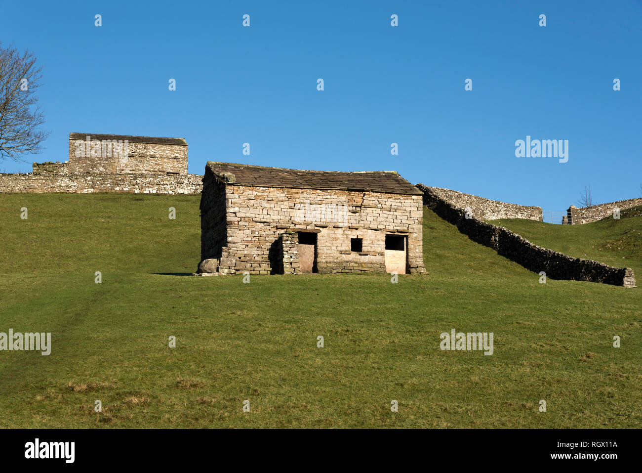 Traditional stone field barns, Sedbusk, near Hawes, Yorkshire Dales National Park - Stock Image