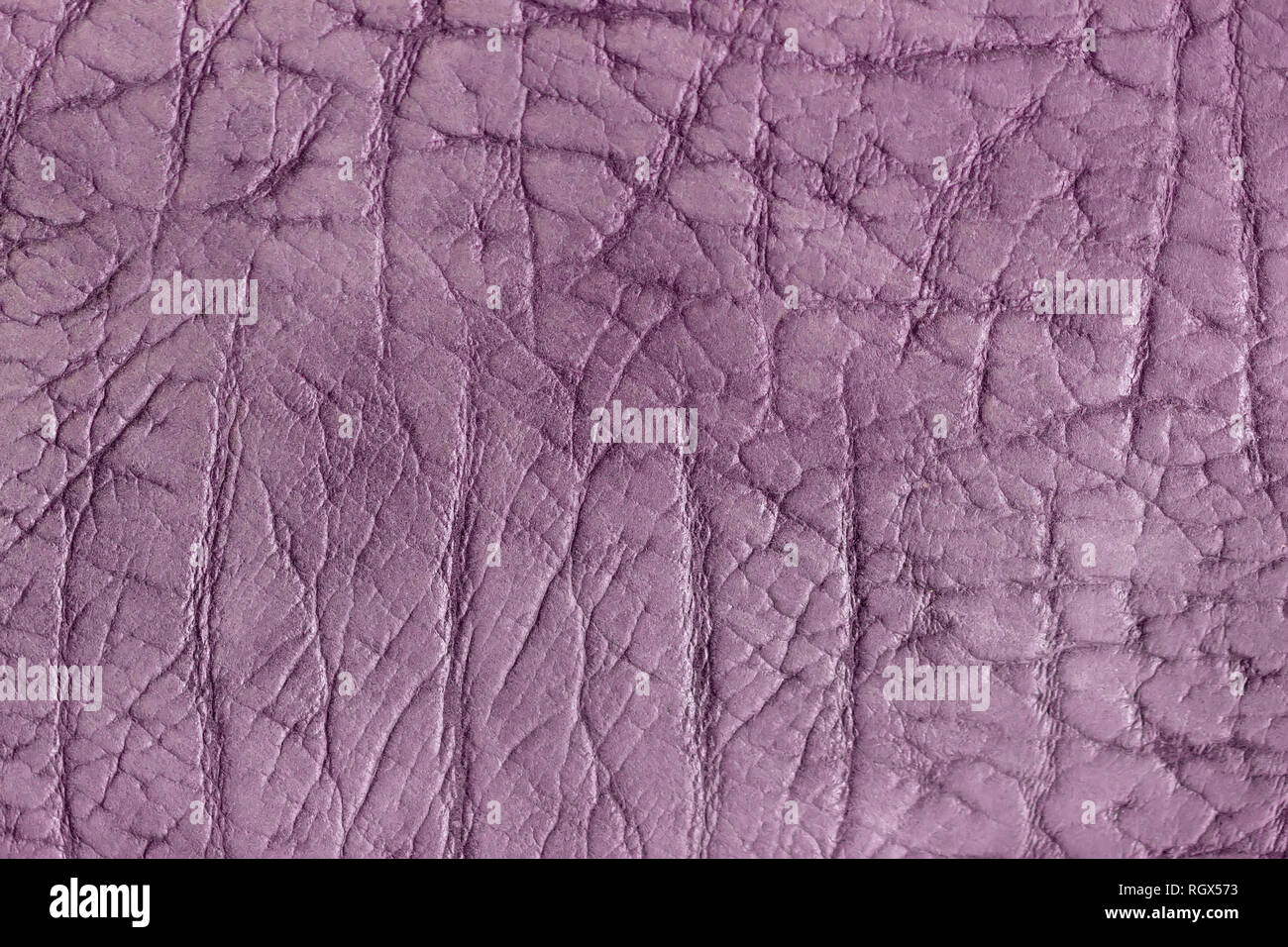 Texture of genuine leather close-up, surface close-up with wrinkles and cracks, violet color print, trendy background - Stock Image