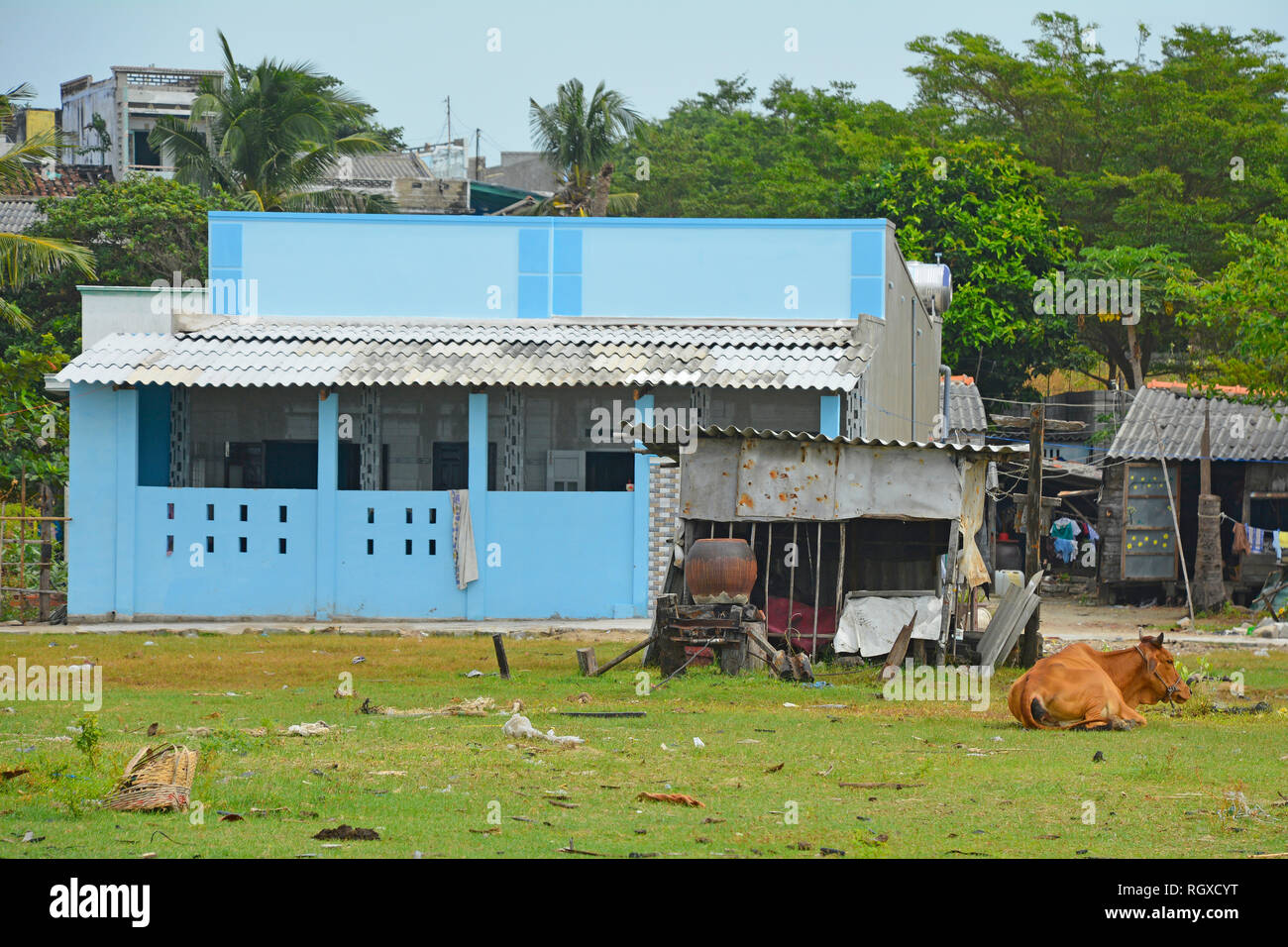A cow tethered outside a house in Mui Ne Fishing Village, Vietnam - Stock Image