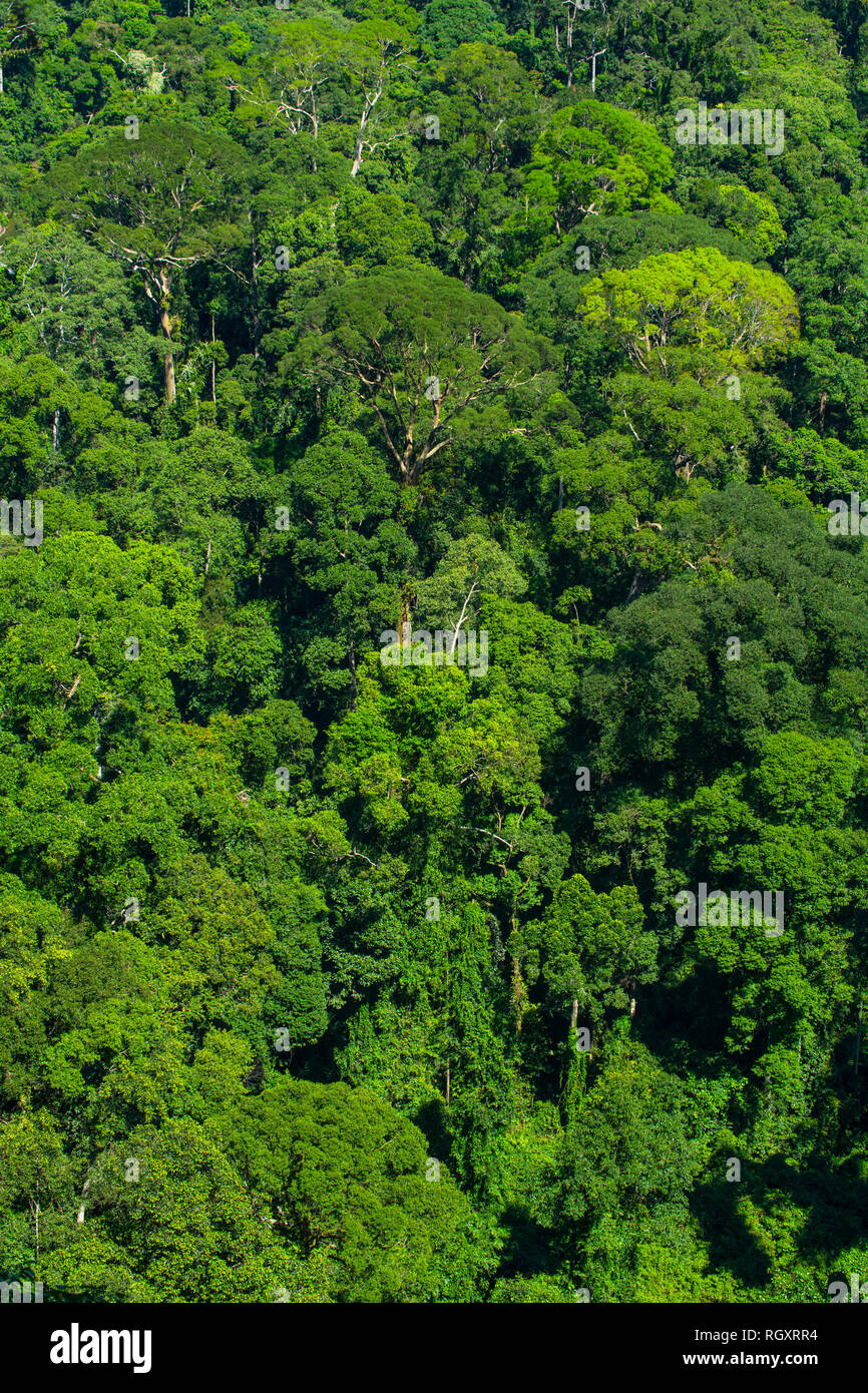 Rainforest canopy viewed from above, in Danum Valley Rainforest, Sabah, Borneo, Malaysia. Stock Photo
