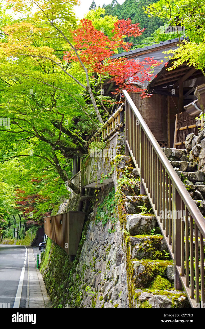 The Vertical Japan Traditional Building, Zen Garden, Village Footpath,  Green Plants And Trees