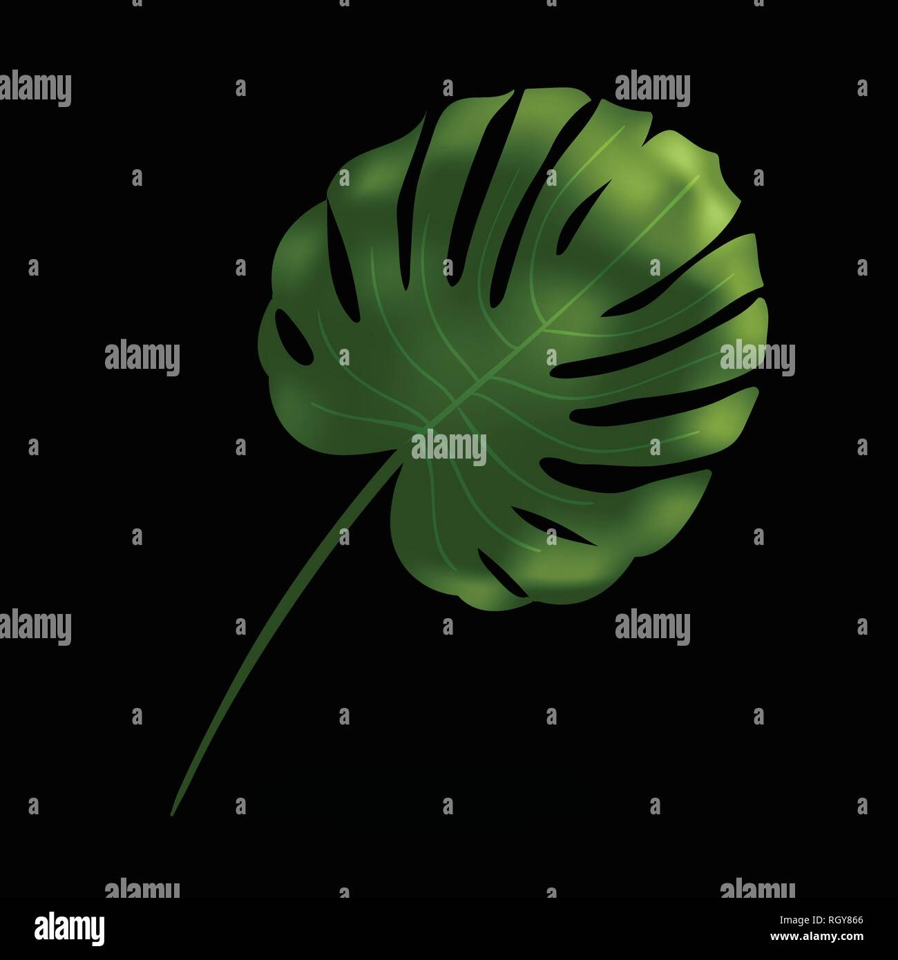 Green monstera leaf. Tropical plant. Realistic vector illustration isolated on black background. Design element for fabrics, invitations, clothes and - Stock Vector