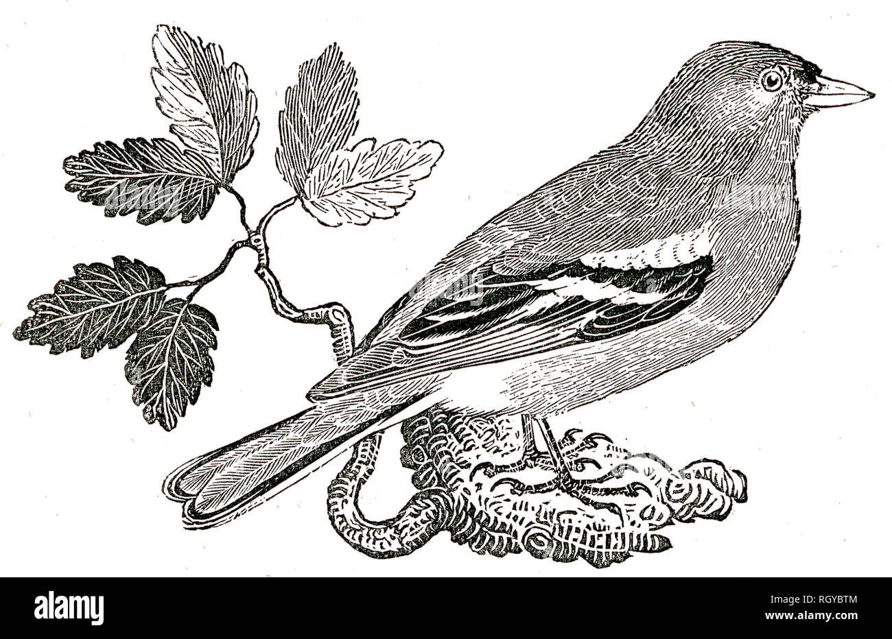 Taken From 'The Natural History of Selborne' By The Rev Gilbert White, 1875 Edition Stock Photo