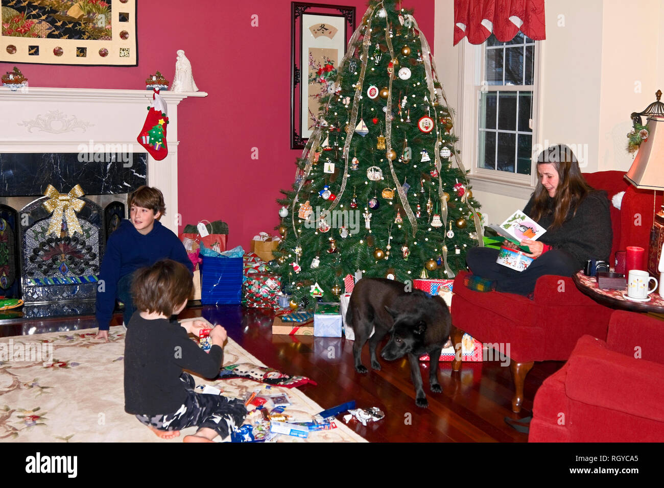 Christmas scene; family; opening gifts; dog; decorated tree; festive; happy; 2 boys; mother; holiday; colorful, bright, horizontal; MR - Stock Image