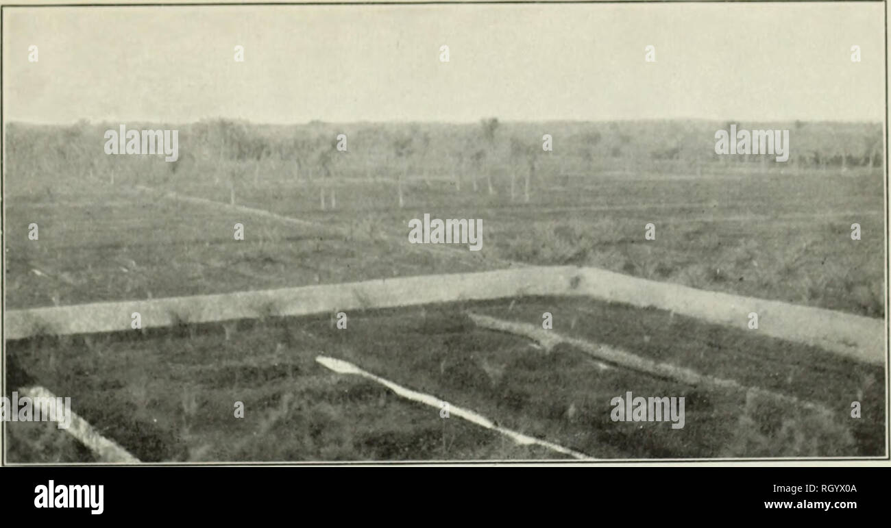 """. Bulletin. 1901-13. Agriculture; Agriculture. Bui. 54, Bureau of Pl<int Industry, U. S. Dopt. of Agriculture. Plate IV.. FiQ. 1.—Panorama of New Date Plantation, Near Bassorah. %. i f •'""""ir» - ^ *^ L Fig. 2.—Irrigation Machines on the Tigris, Near Bagdad.. Please note that these images are extracted from scanned page images that may have been digitally enhanced for readability - coloration and appearance of these illustrations may not perfectly resemble the original work.. United States. Bureau of Plant Industry, Soils, and Agricultural Engineering. Washington Govt. Print. Off - Stock Image"""