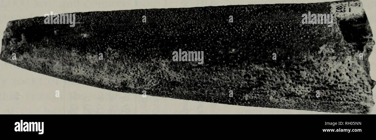 7887 Stock Photos & 7887 Stock Images - Alamy
