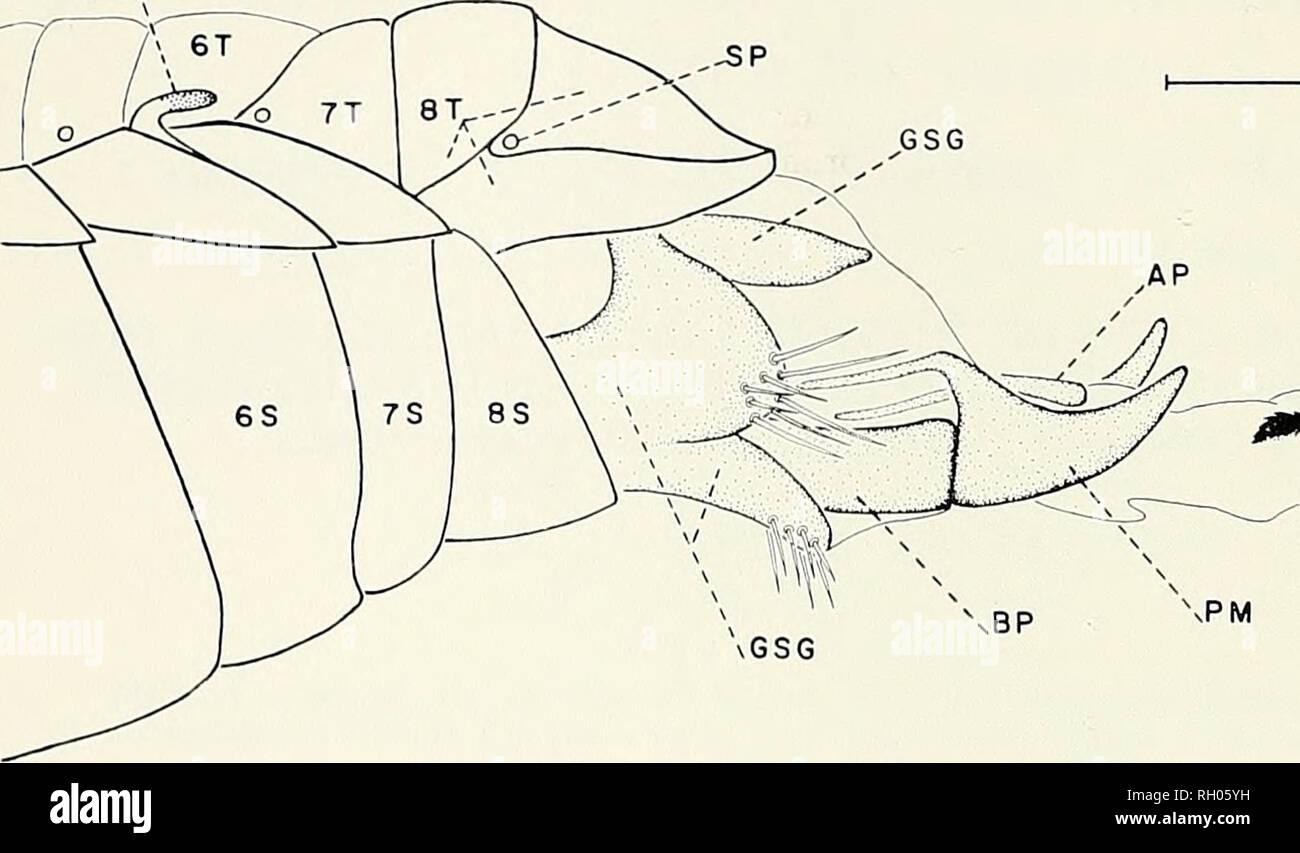 Bulletin. Science  Natural history  Natural history. 50 BULLETIN SOUTHERN  CALIFORNIA ACADEMY . 2690c47e3
