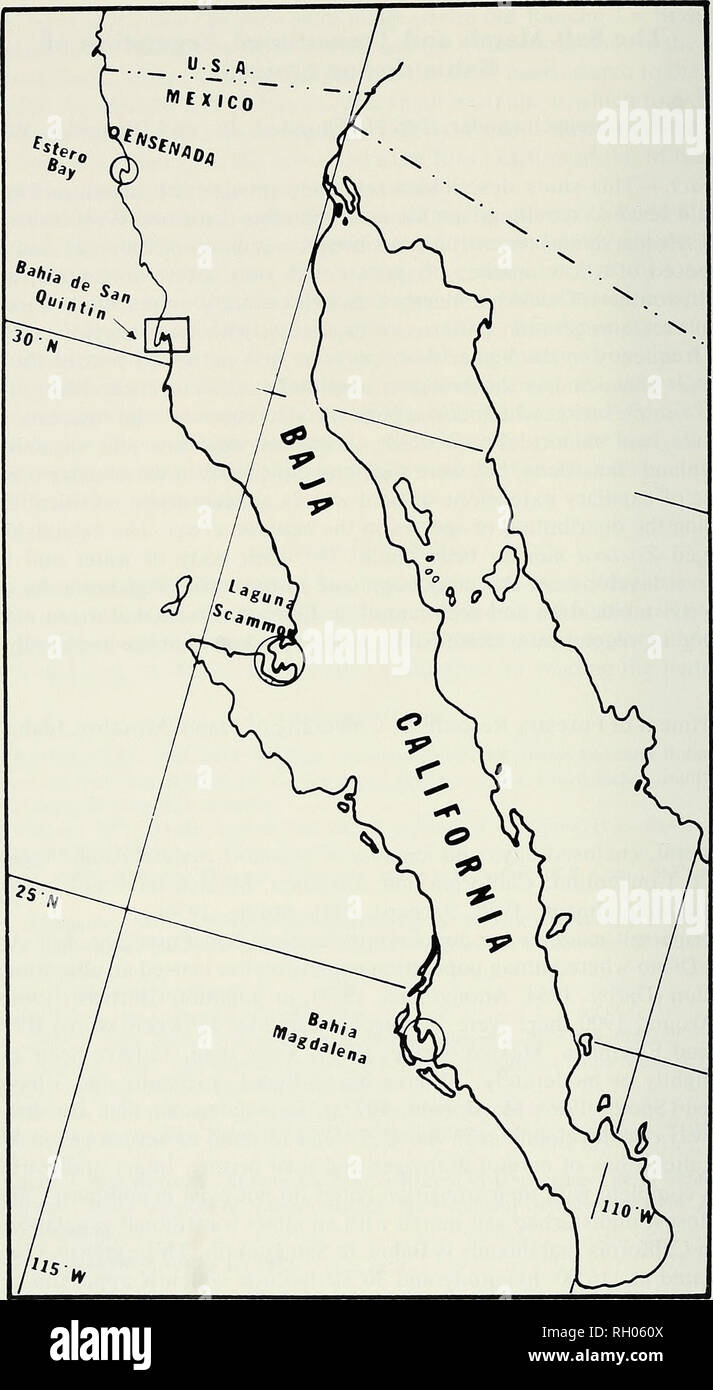 Bahia De Los Angeles Map.Bulletin Science Natural History Natural History 164 Southern