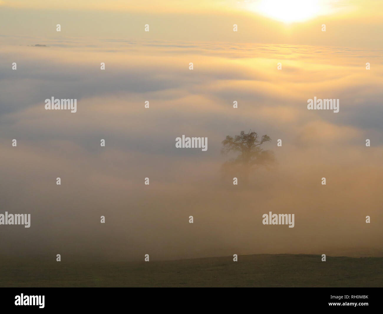 UK Weather: Unique foggy conditions at sunset in North Yorkshire near Easingwold. The recent cold spell continues and in the late afternoon the fog and mist was seen across the local fields and valleys in the Howardian Hills and Vale of York. Credit: credit: Matt Pennington / PennPix/Alamy Live News Stock Photo