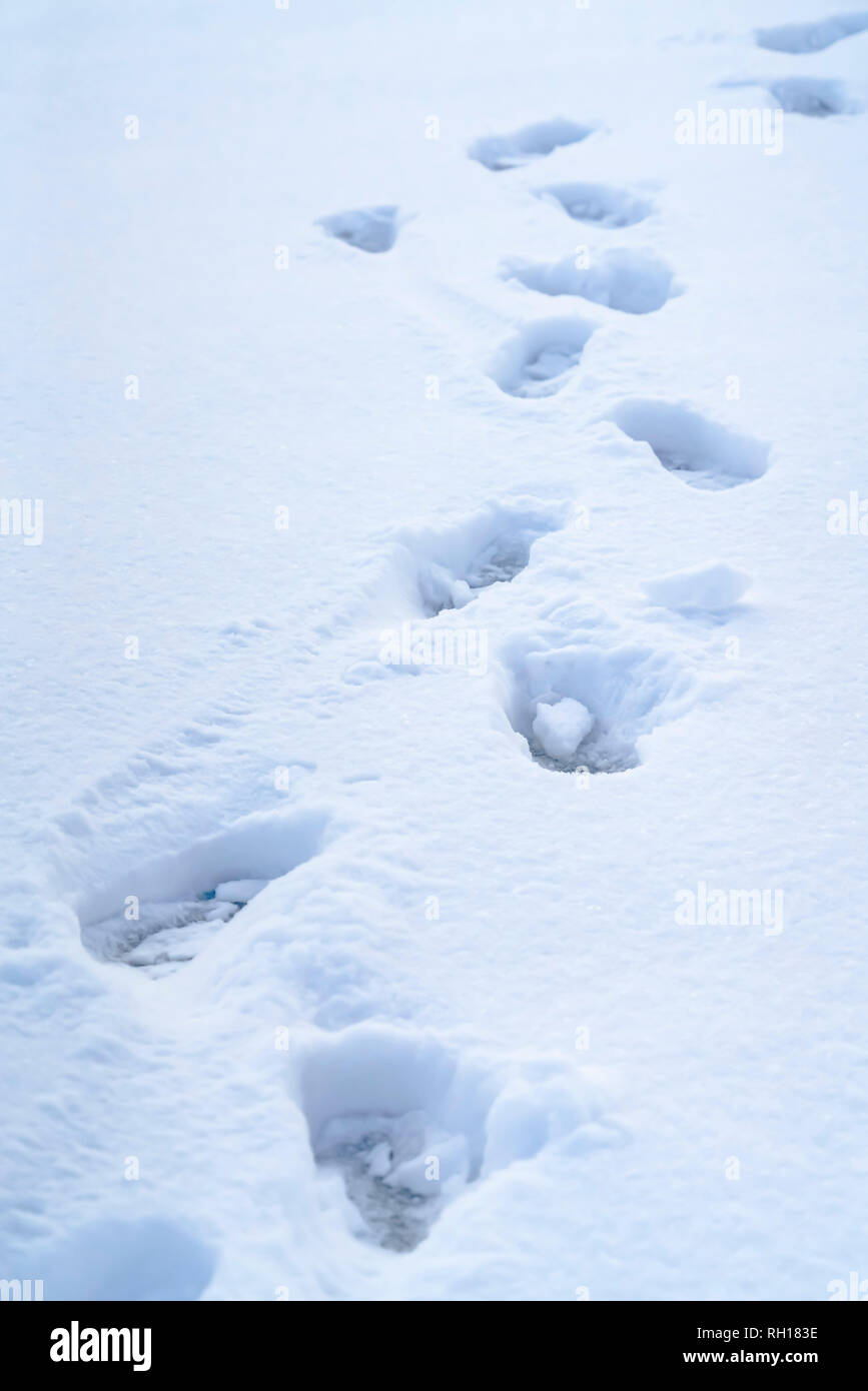 Footprints on powdery snow covering the ground Stock Photo